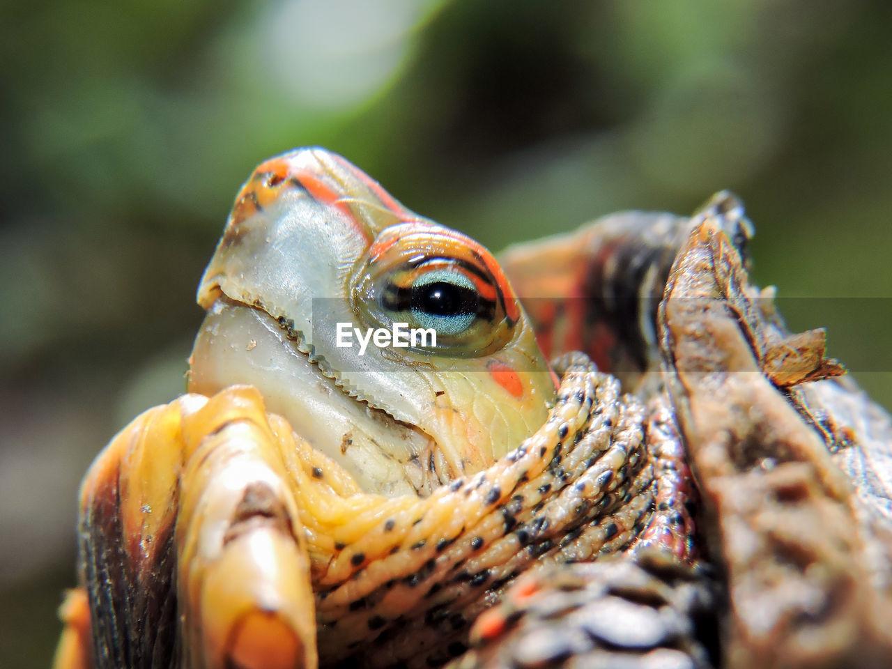 Detail Shot Of Turtle