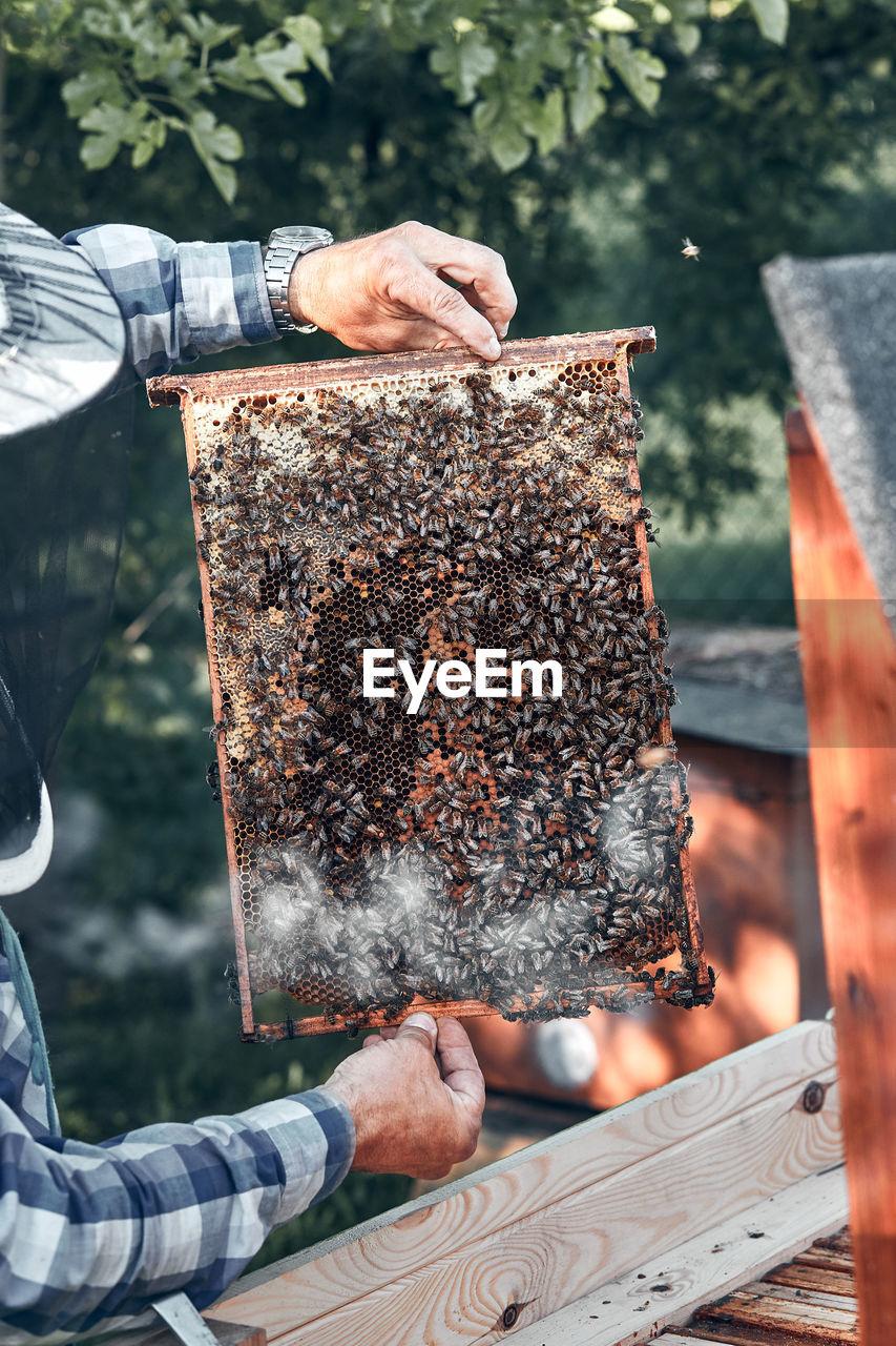 Beekeeper working at farm