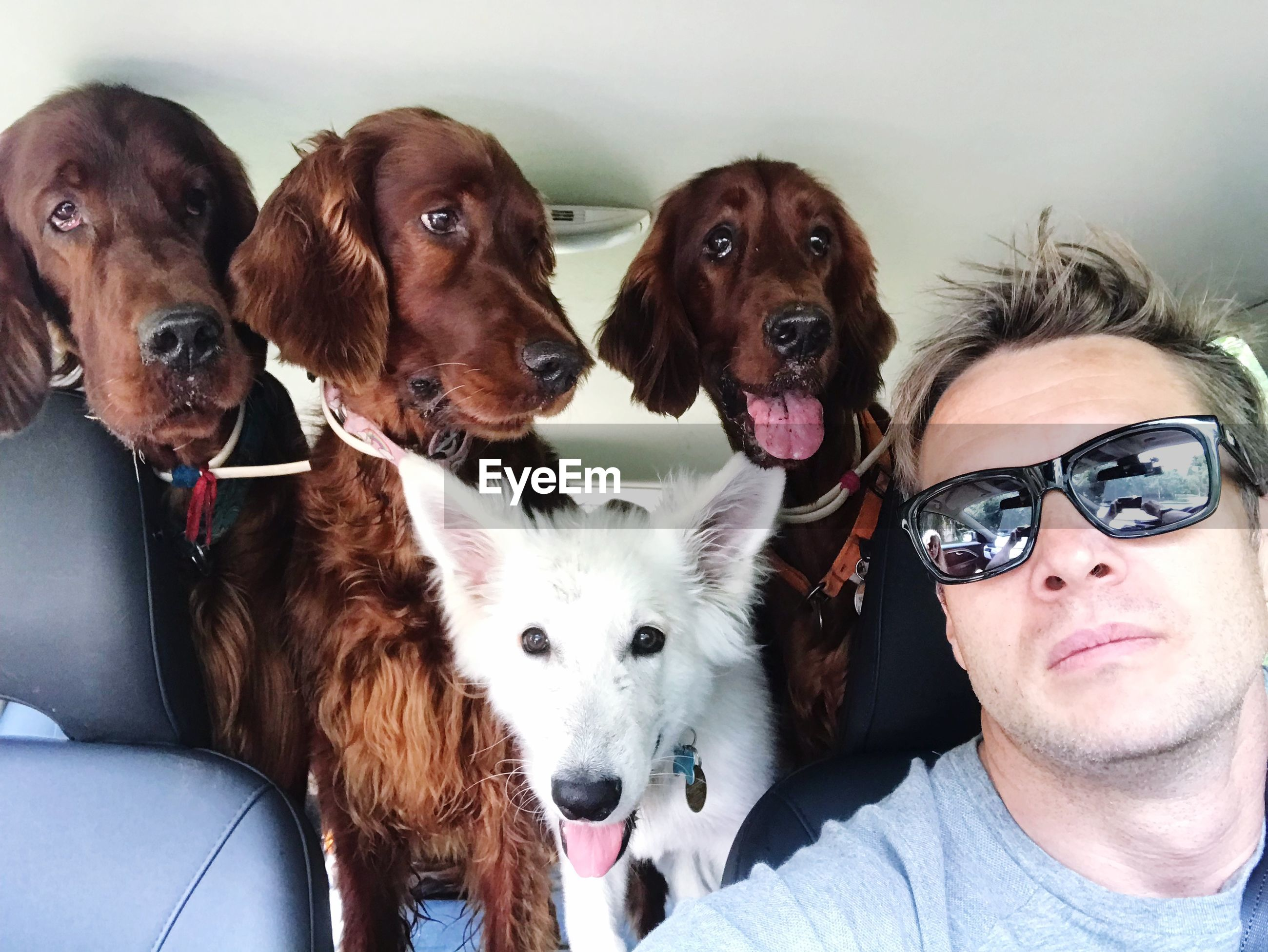 Close-up portrait of man with dogs in car