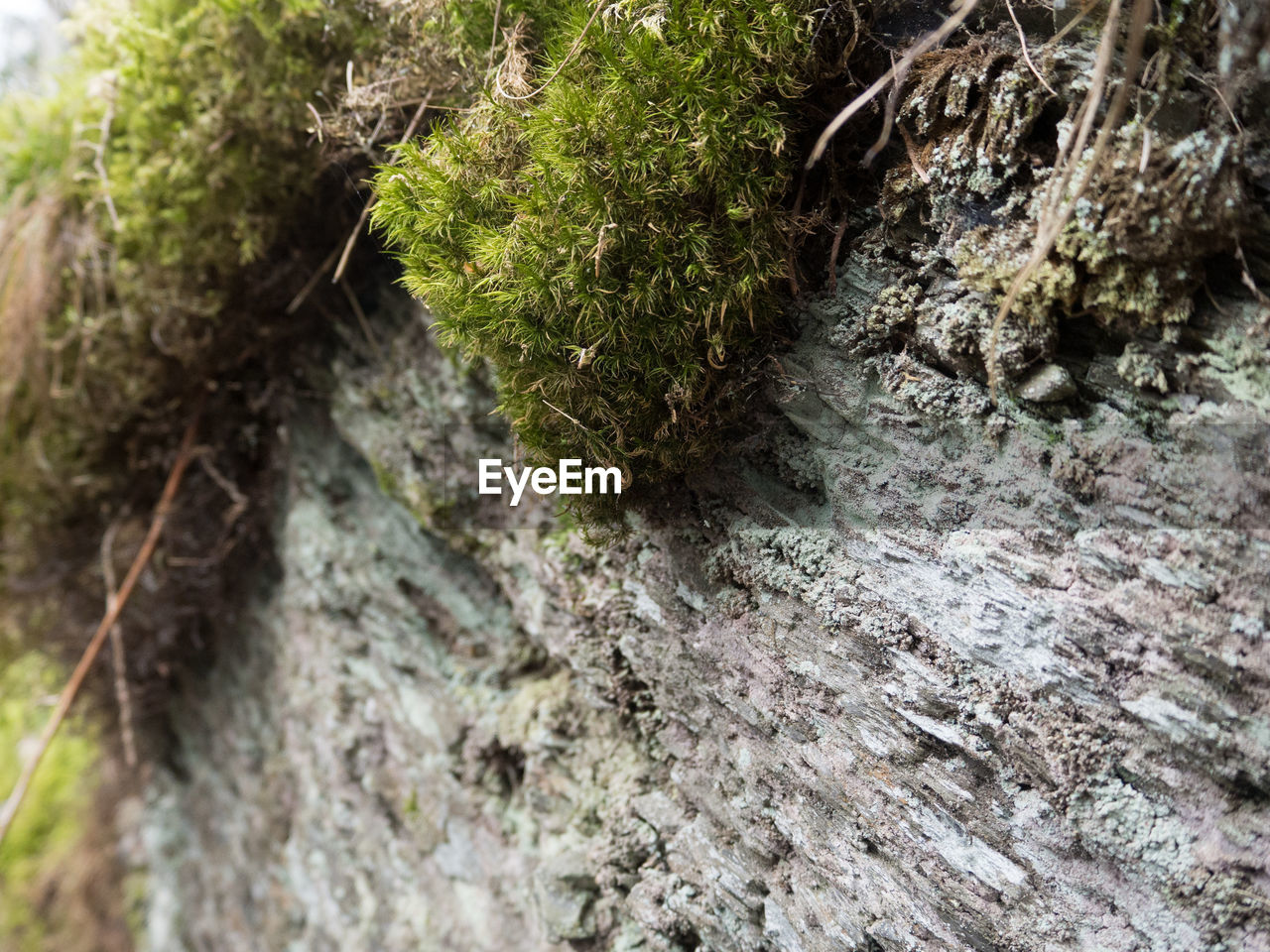 nature, rock - object, moss, no people, day, outdoors, beauty in nature, growth, close-up, tree trunk, forest