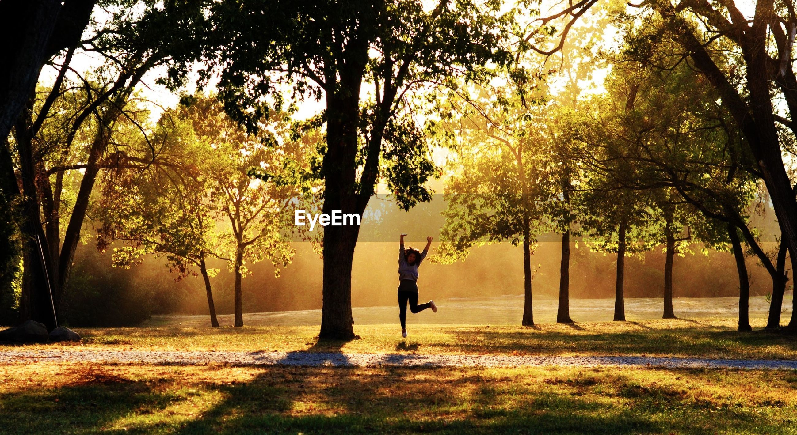 tree, tree trunk, tranquility, nature, autumn, one person, tranquil scene, park - man made space, orange color, growth, beauty in nature, sunset, landscape, sunlight, scenics, field, change, full length, branch, park