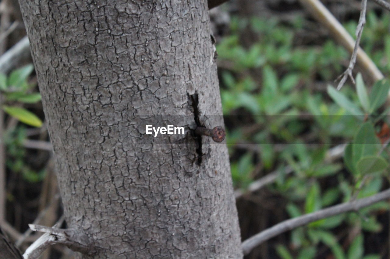 tree trunk, insect, animals in the wild, one animal, tree, animal themes, nature, animal wildlife, outdoors, no people, day, close-up, mammal