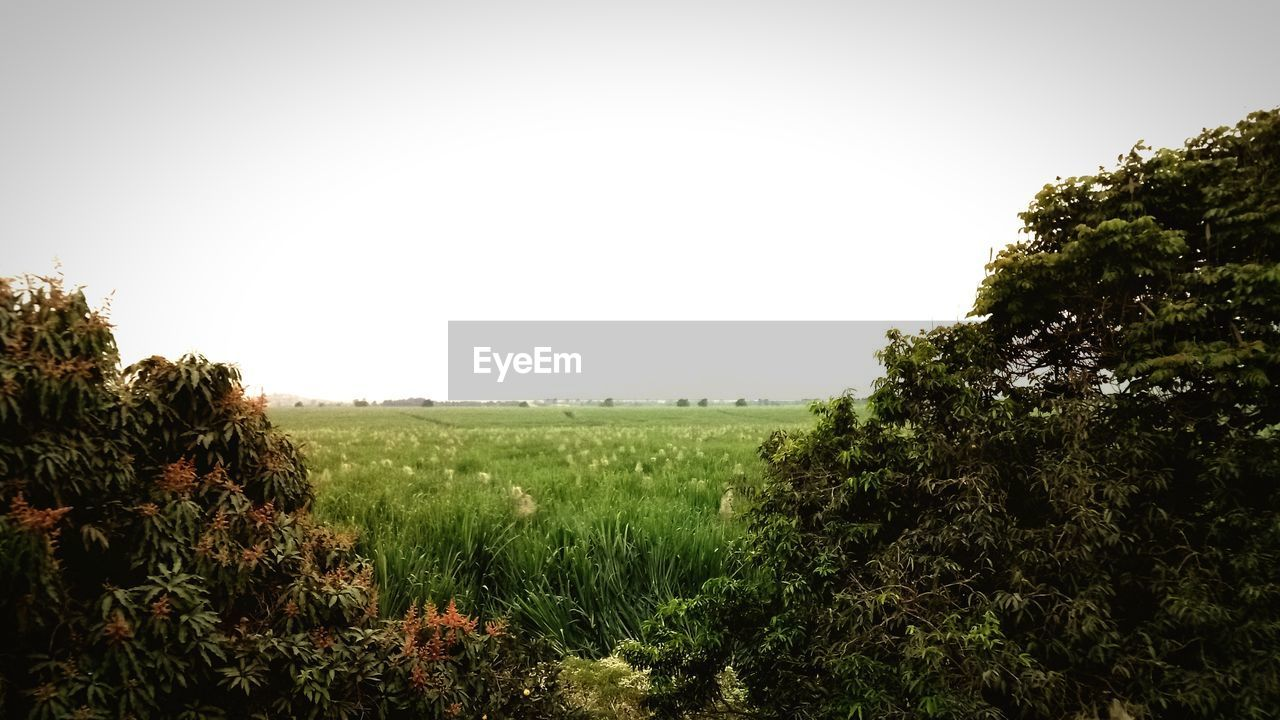 growth, plant, sky, environment, beauty in nature, landscape, nature, land, tranquility, field, tree, tranquil scene, clear sky, copy space, no people, day, outdoors, scenics - nature, green color, non-urban scene