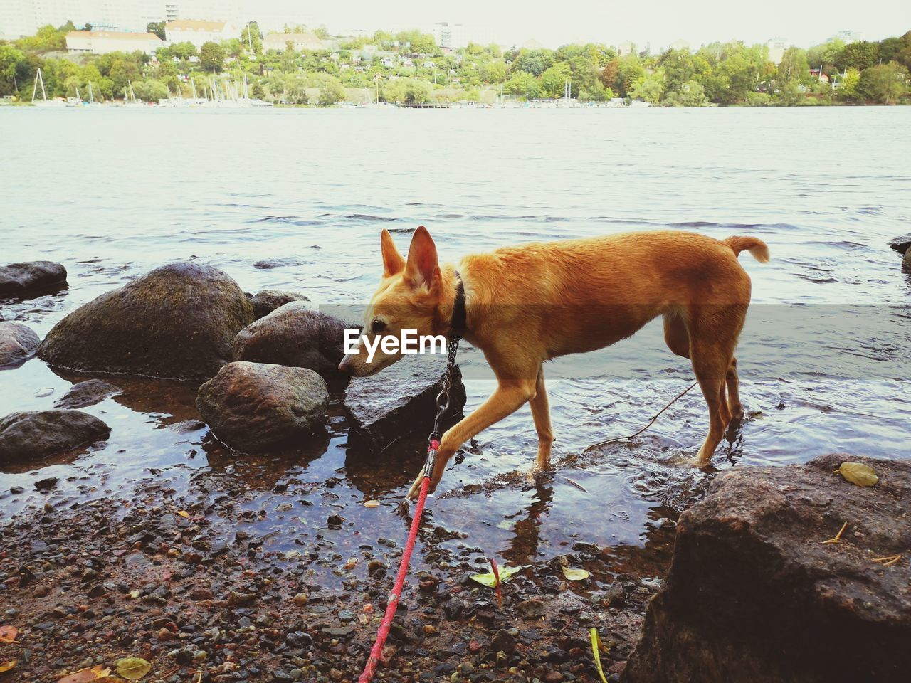 water, mammal, animal, animal themes, one animal, vertebrate, domestic animals, pets, domestic, nature, standing, solid, rock, day, no people, river, canine, rock - object