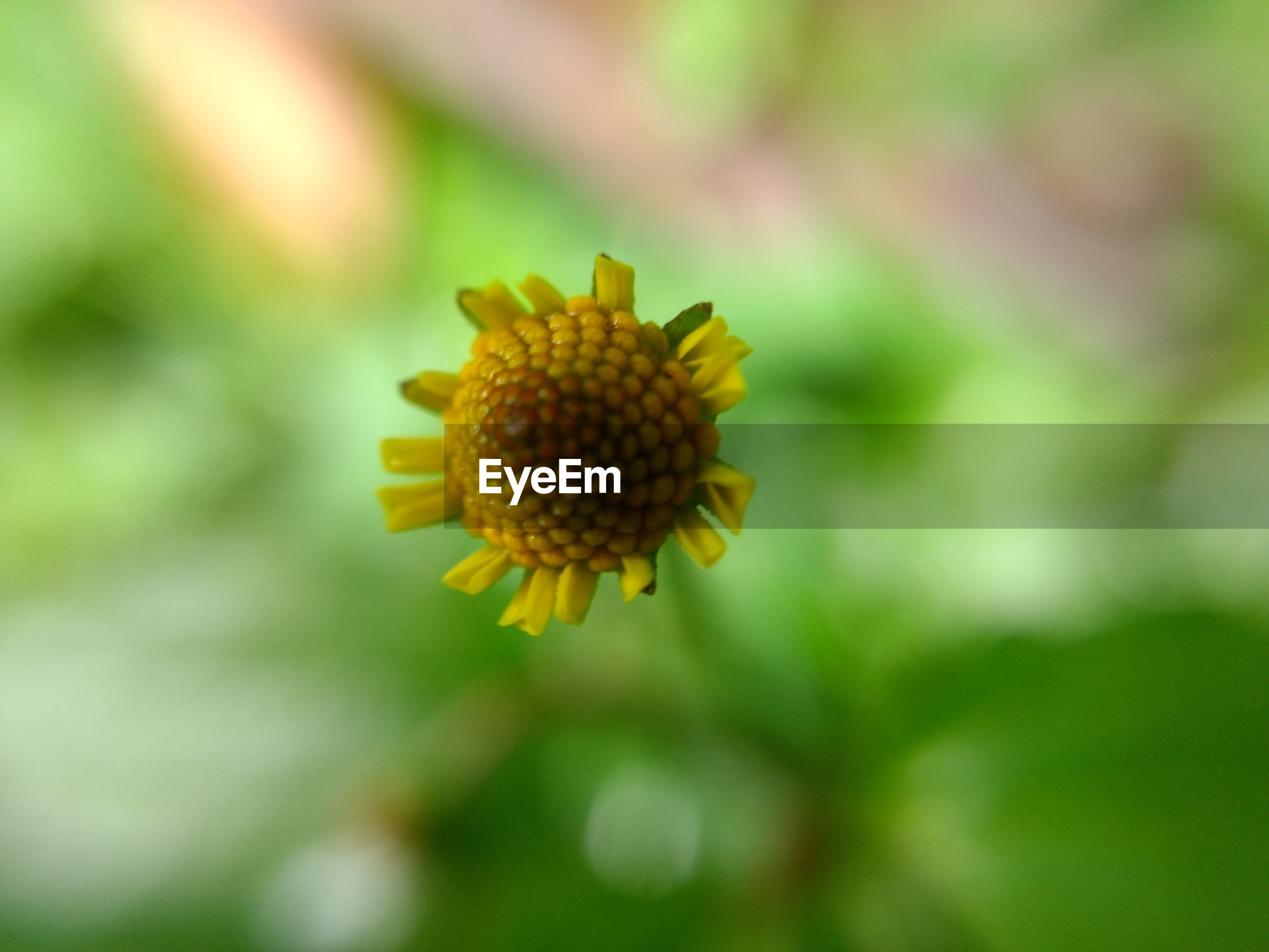flower, growth, nature, yellow, petal, fragility, beauty in nature, flower head, focus on foreground, outdoors, day, no people, close-up, freshness, plant, blooming