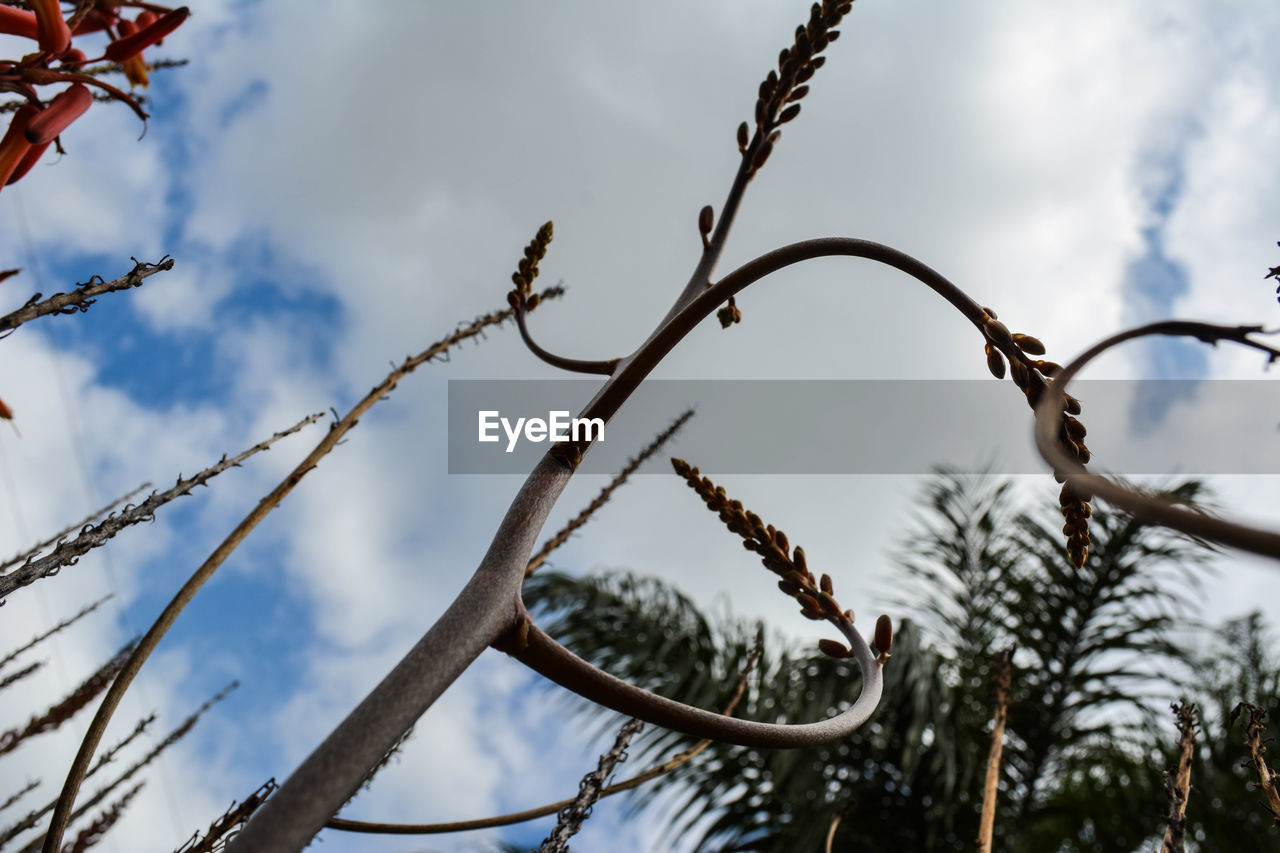 low angle view, day, outdoors, sky, no people, nature, branch, tree, beauty in nature, close-up