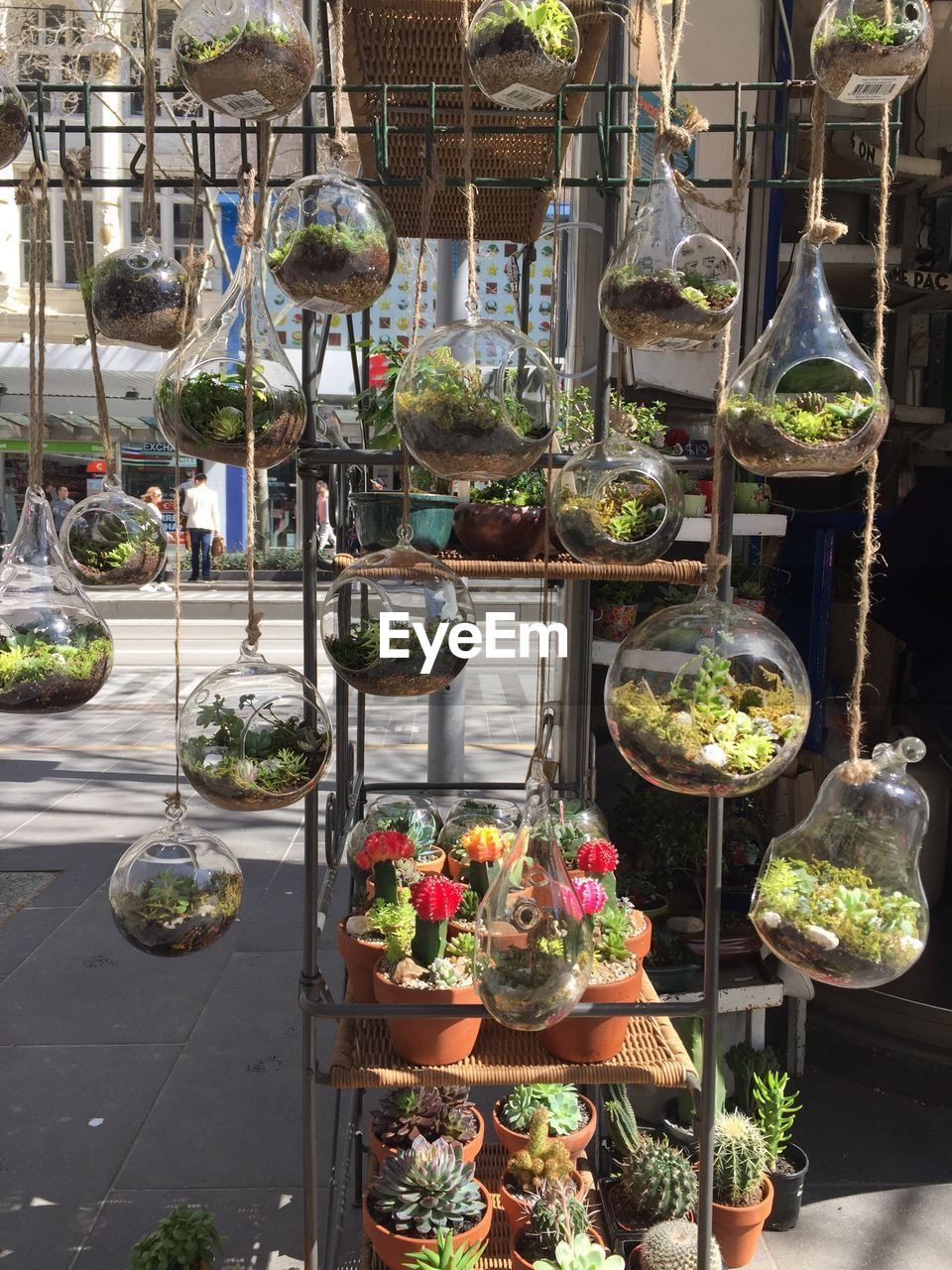 Close-up of potted plants hanging for sale in market