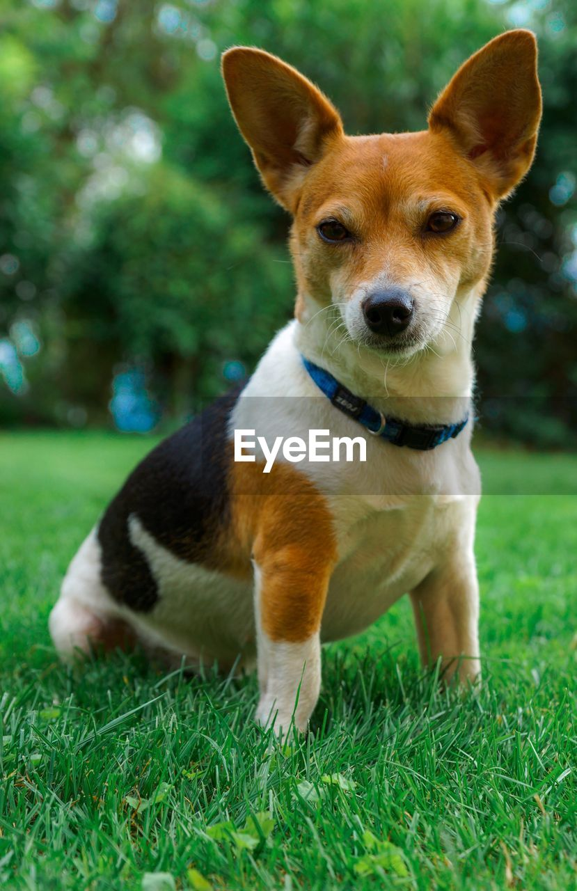 Portrait Of Dog Sitting On Grass