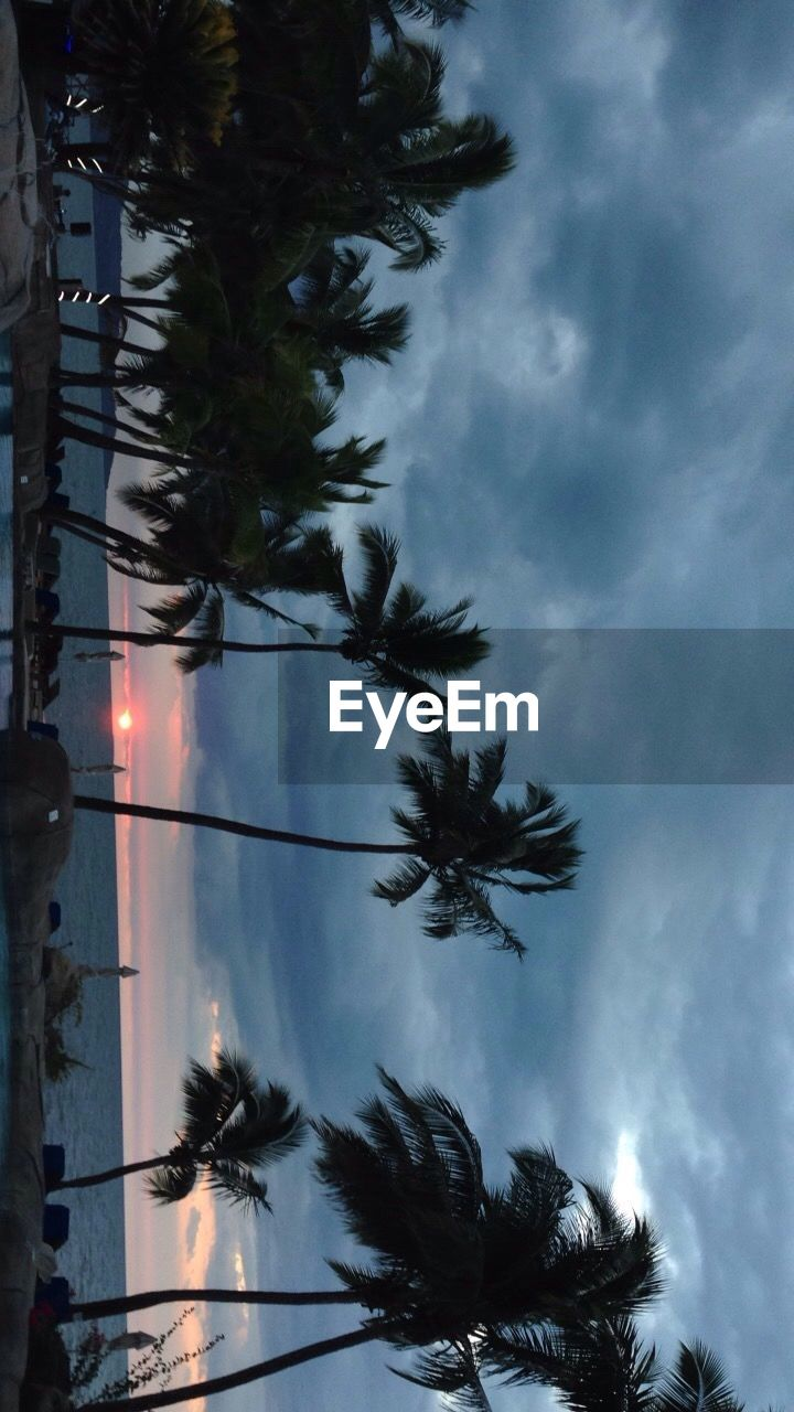 palm tree, tree, sky, low angle view, nature, silhouette, outdoors, growth, no people, beauty in nature, day