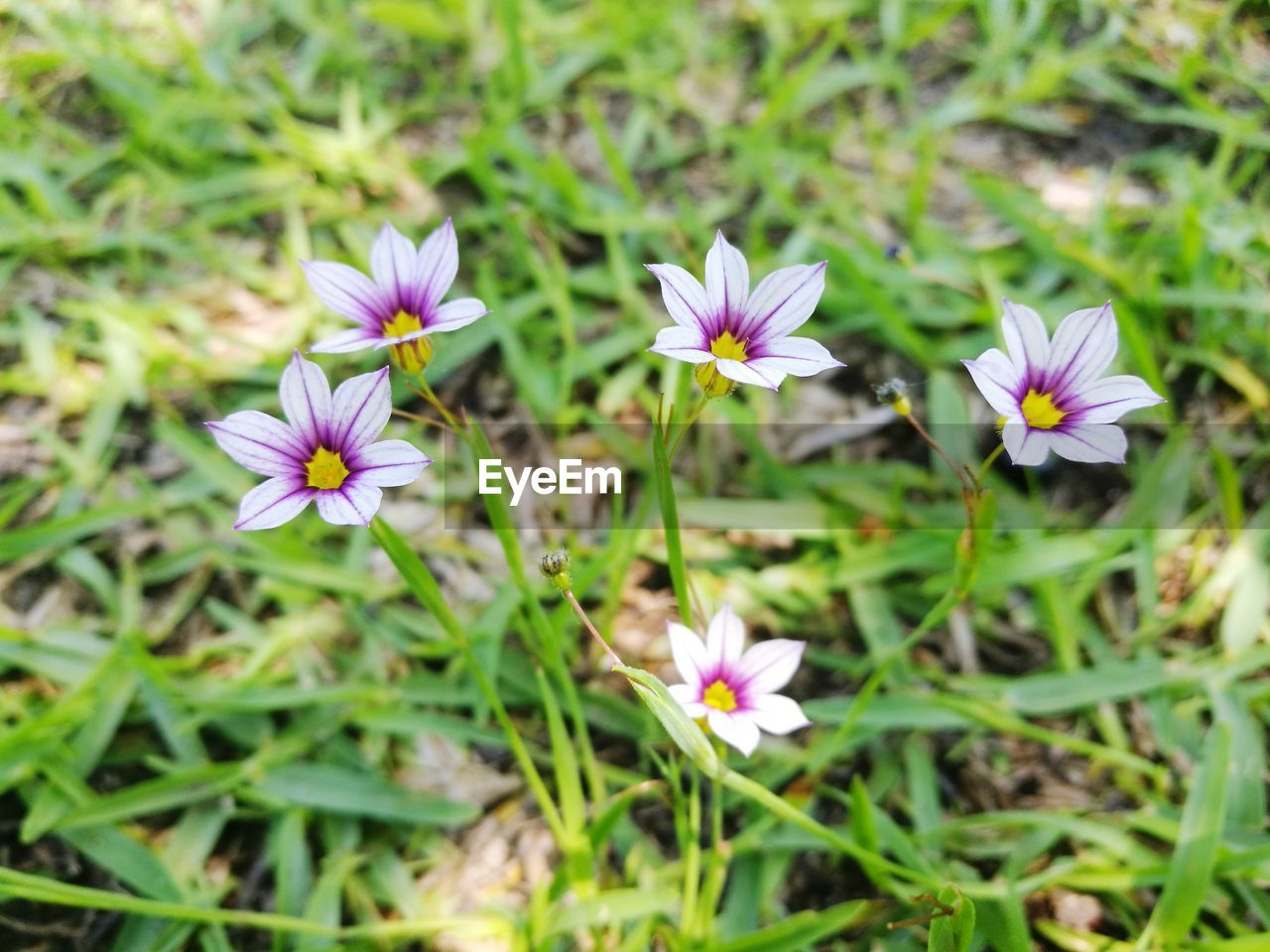 flowering plant, flower, freshness, plant, vulnerability, beauty in nature, fragility, petal, growth, inflorescence, close-up, flower head, land, field, nature, day, selective focus, no people, purple, white color, outdoors