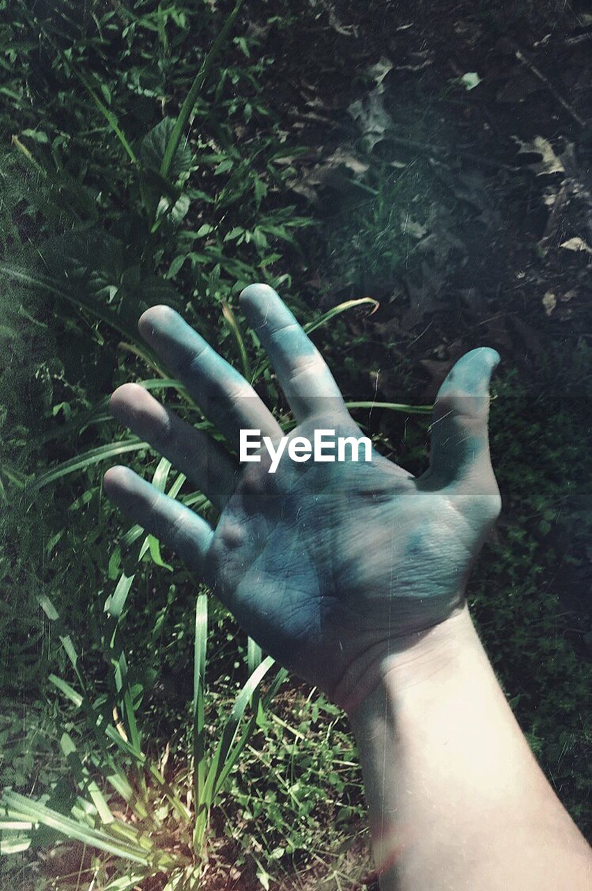 human hand, human body part, human finger, one person, real people, day, outdoors, men, lifestyles, close-up, palm, nature, people