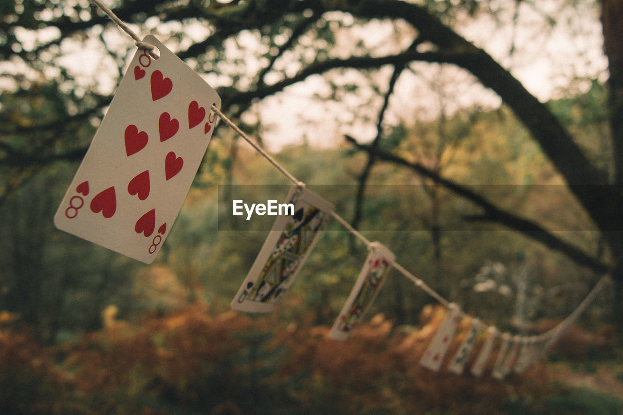 Cards Hanging On Rope Against Trees