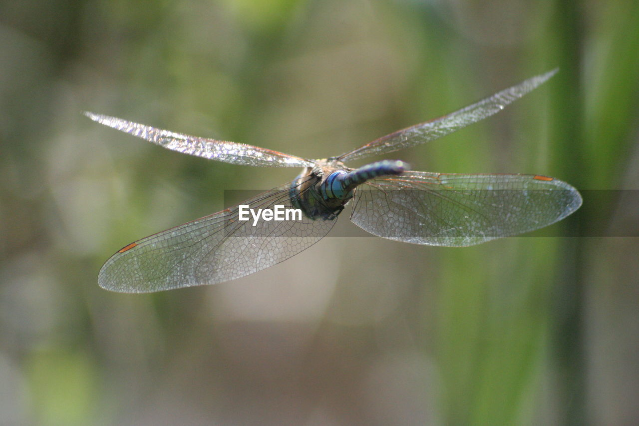 invertebrate, one animal, animal wildlife, animals in the wild, animal themes, insect, animal, close-up, animal wing, focus on foreground, plant, dragonfly, day, nature, no people, plant part, leaf, green color, outdoors, zoology