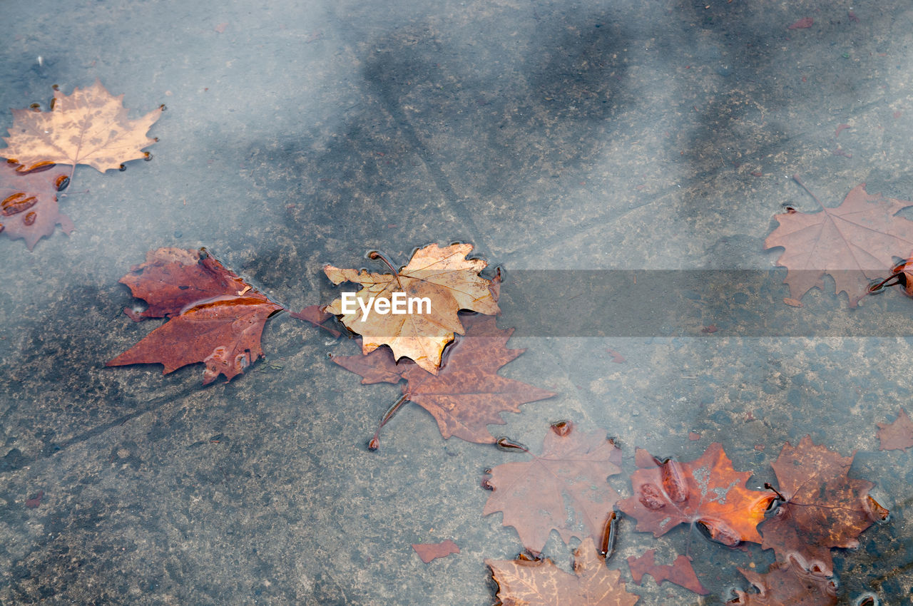 autumn, leaf, plant part, change, maple leaf, leaves, high angle view, nature, day, dry, no people, falling, close-up, outdoors, fragility, beauty in nature, vulnerability, street, city, orange color, natural condition, floating on water, fall, autumn collection