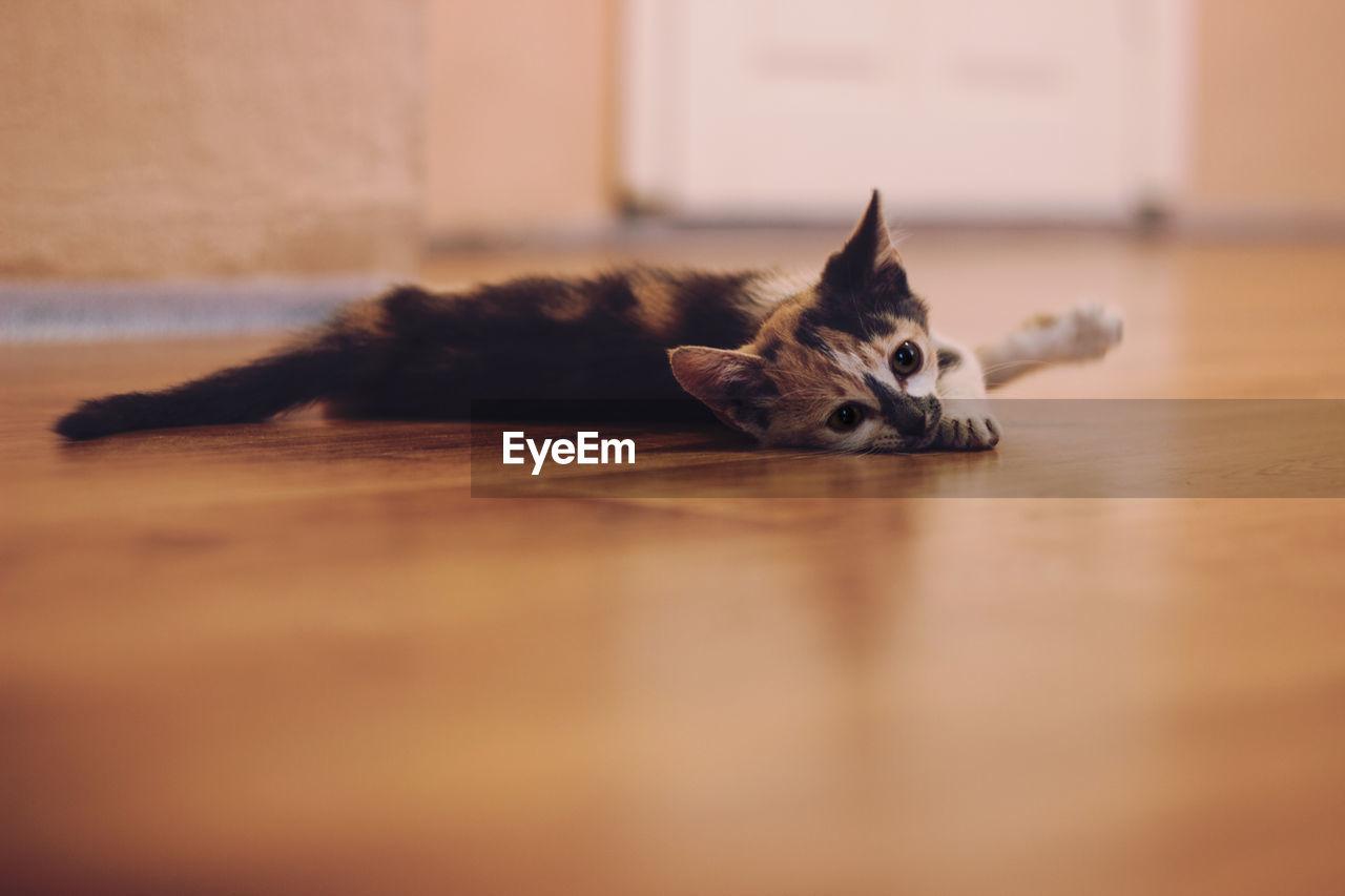Kitten Lying At Home