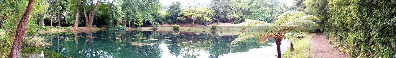 Park Reflection Water Day Outdoors Nature Growth Tree Plant Beauty In Nature