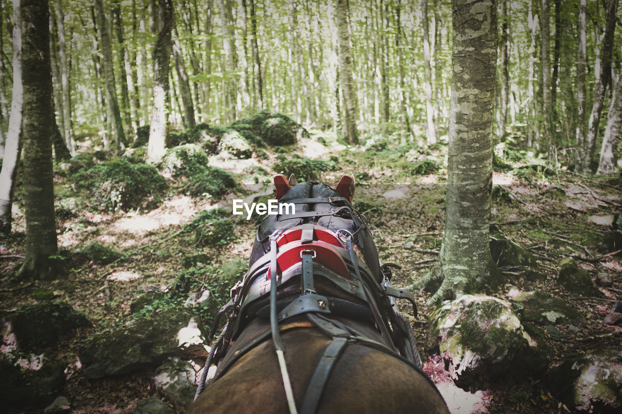 Horse standing amidst trees in forest