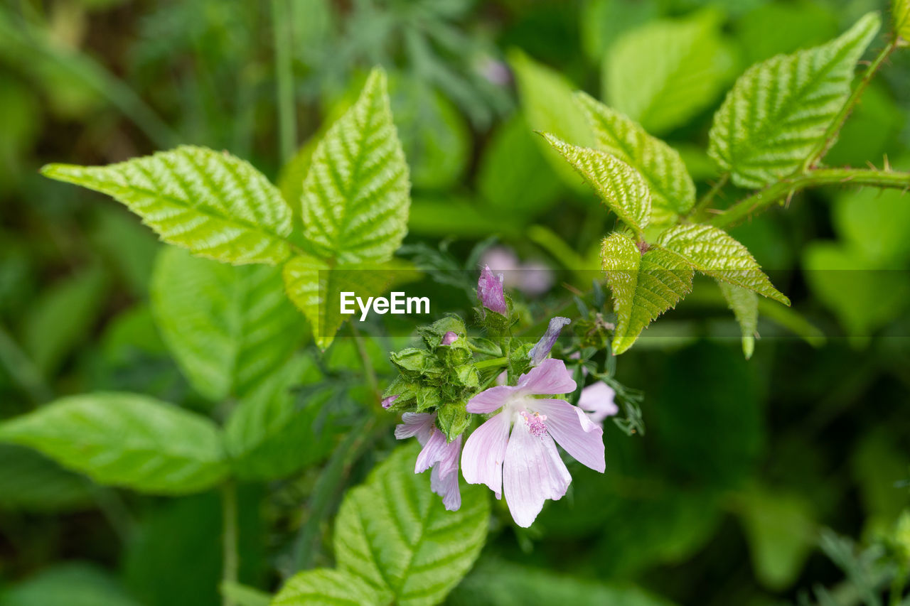 plant, growth, plant part, beauty in nature, flower, leaf, freshness, green color, flowering plant, fragility, vulnerability, close-up, nature, focus on foreground, day, petal, no people, flower head, inflorescence, outdoors