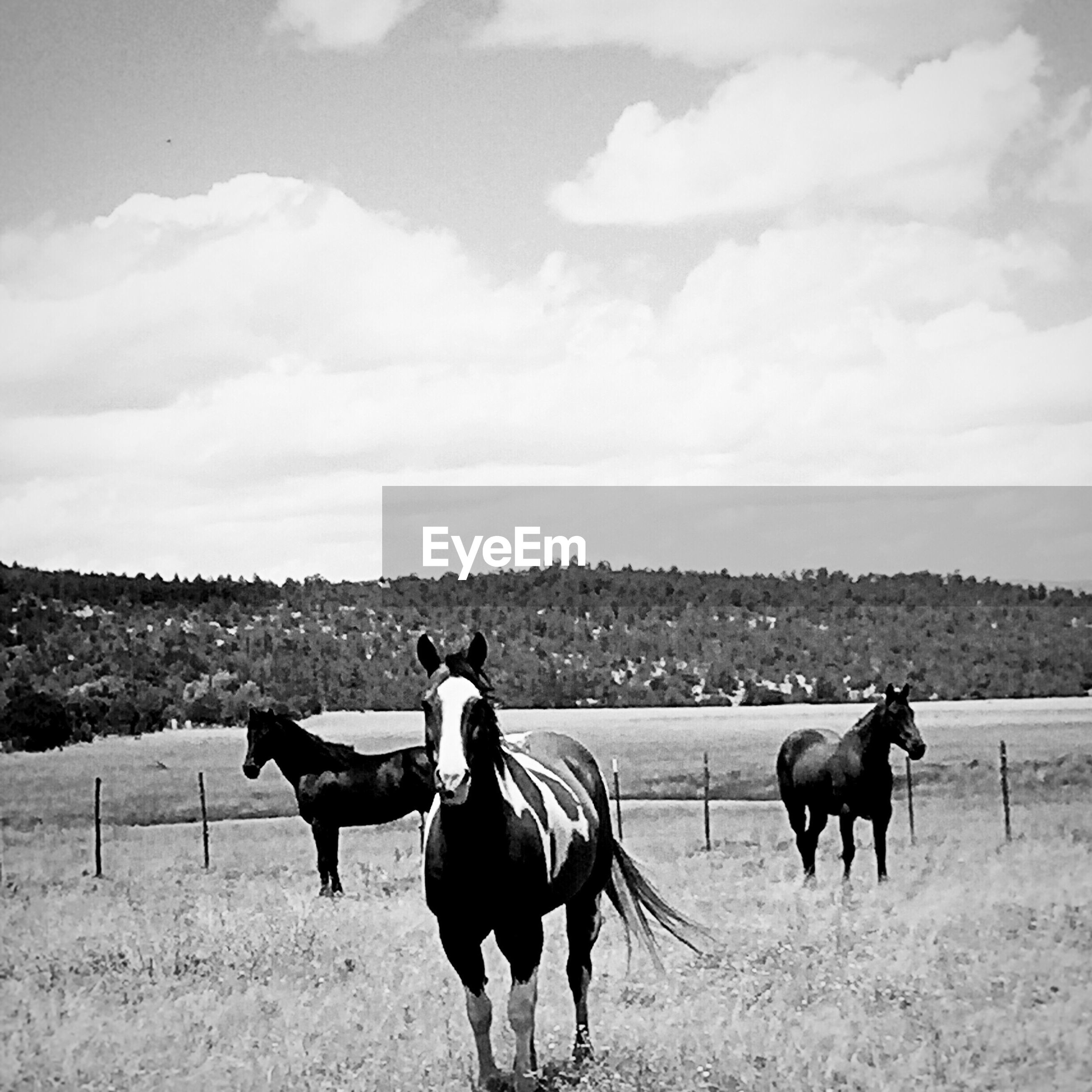 Horse on field against clear sky