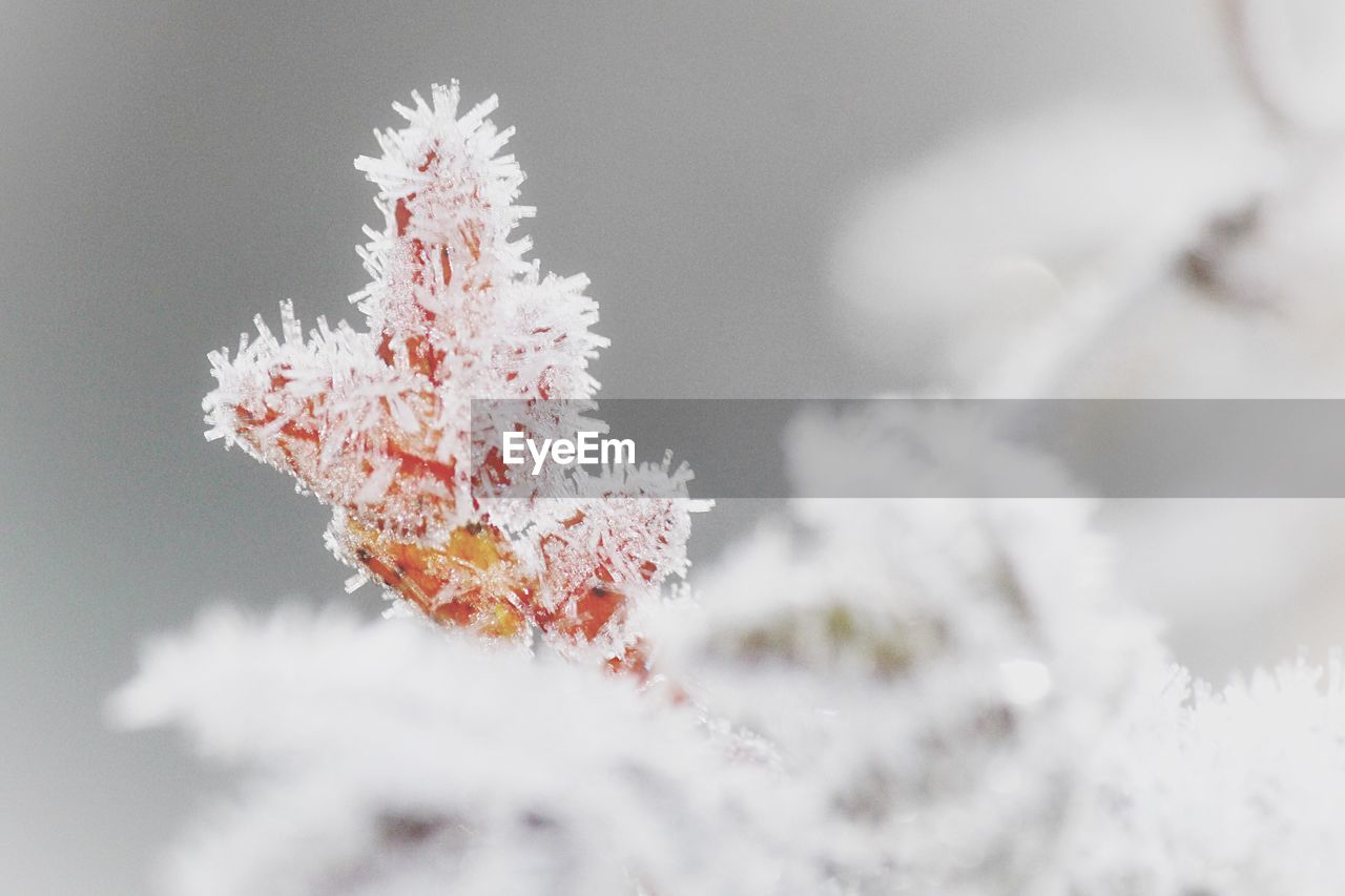 snow, winter, cold temperature, frozen, ice, nature, white color, close-up, plant, day, no people, focus on foreground, beauty in nature, frost, covering, outdoors, selective focus, growth, tranquility
