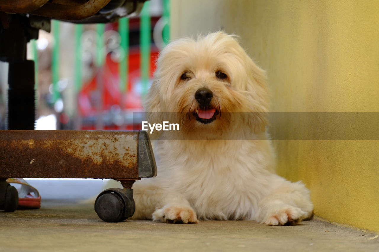 dog, pets, domestic animals, animal themes, one animal, mammal, focus on foreground, close-up, day, no people, indoors