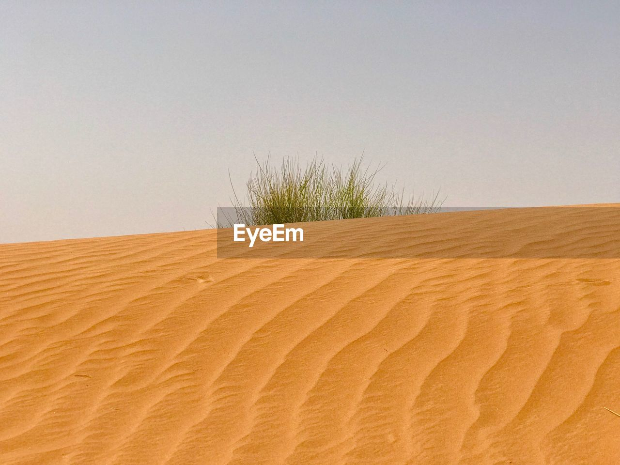 sand, sand dune, sky, land, desert, landscape, climate, no people, plant, scenics - nature, arid climate, copy space, nature, tranquility, environment, tranquil scene, horizon over land, clear sky, pattern, beauty in nature, atmospheric, marram grass