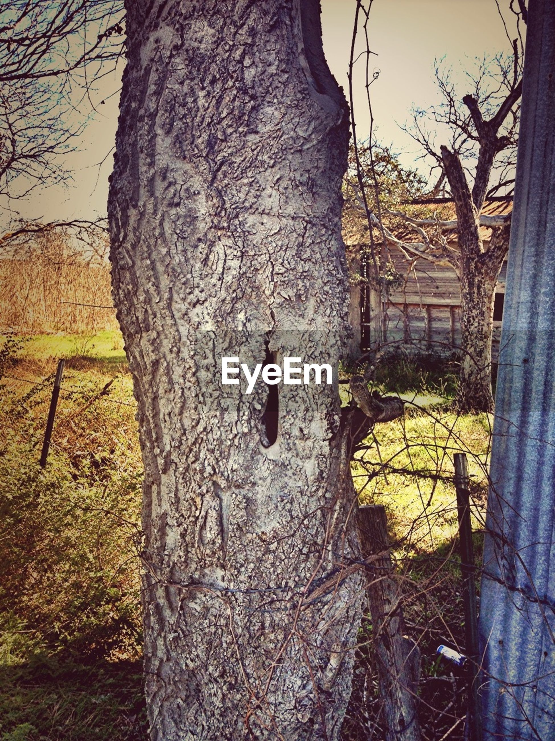 tree, tree trunk, field, built structure, grass, building exterior, architecture, bare tree, fence, day, outdoors, nature, growth, sunlight, no people, sky, branch, house, abandoned, old
