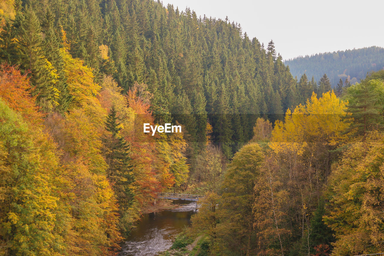 autumn, tree, nature, forest, beauty in nature, scenics, change, growth, tranquil scene, water, tranquility, no people, outdoors, landscape, mountain, day, sky