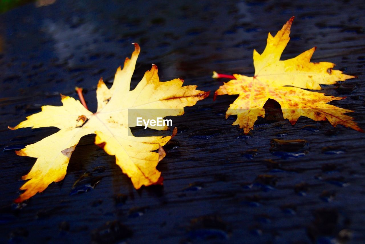 Yellow leaves on wet ground