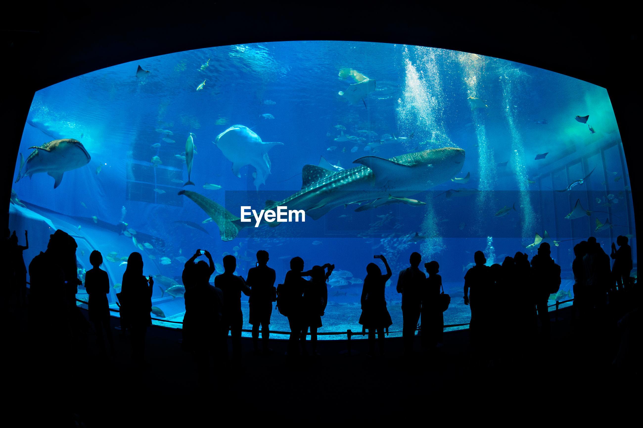 Silhouette people in front of fish tank at aquarium