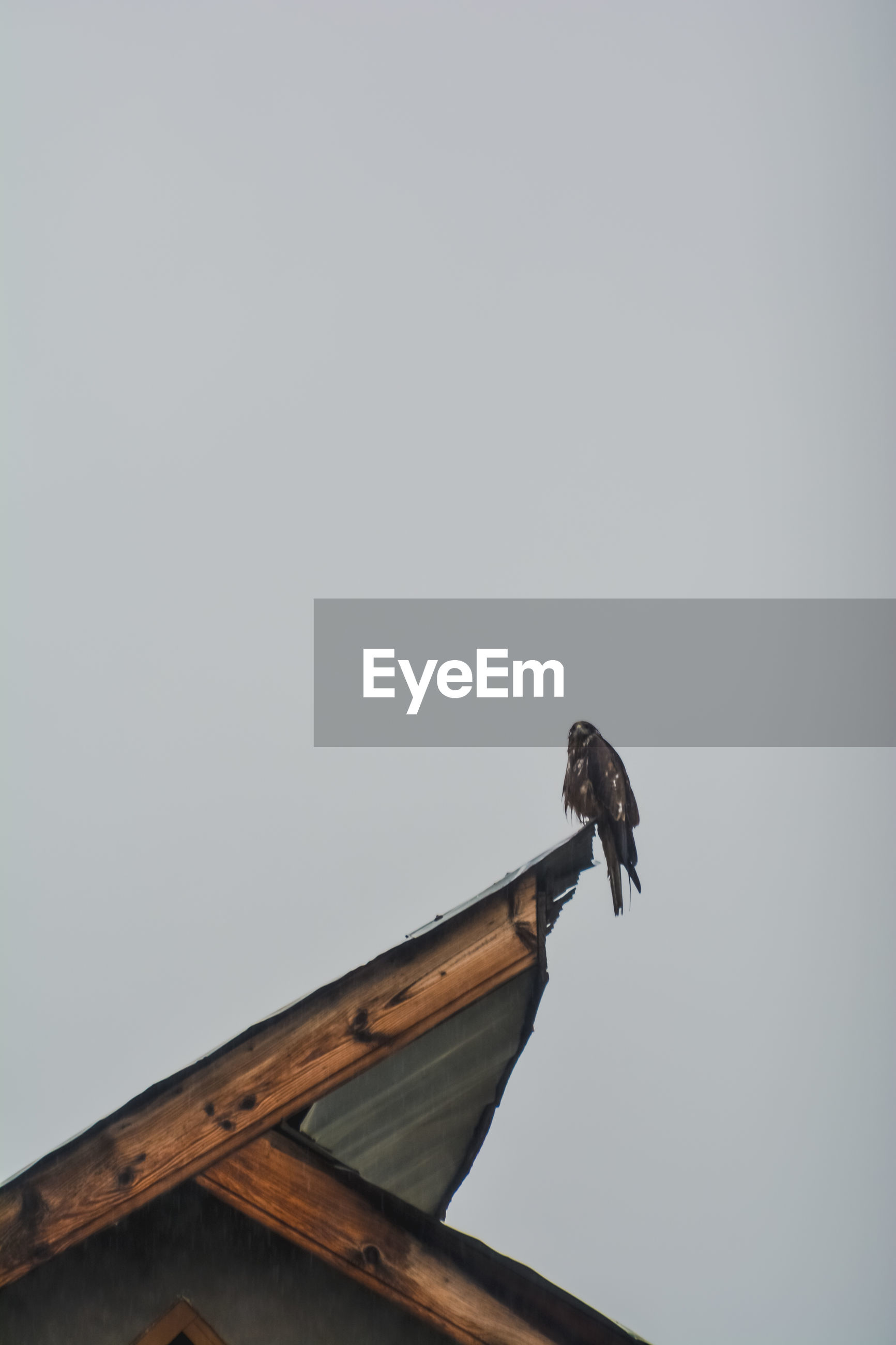 LOW ANGLE VIEW OF BIRD ON ROOF AGAINST SKY