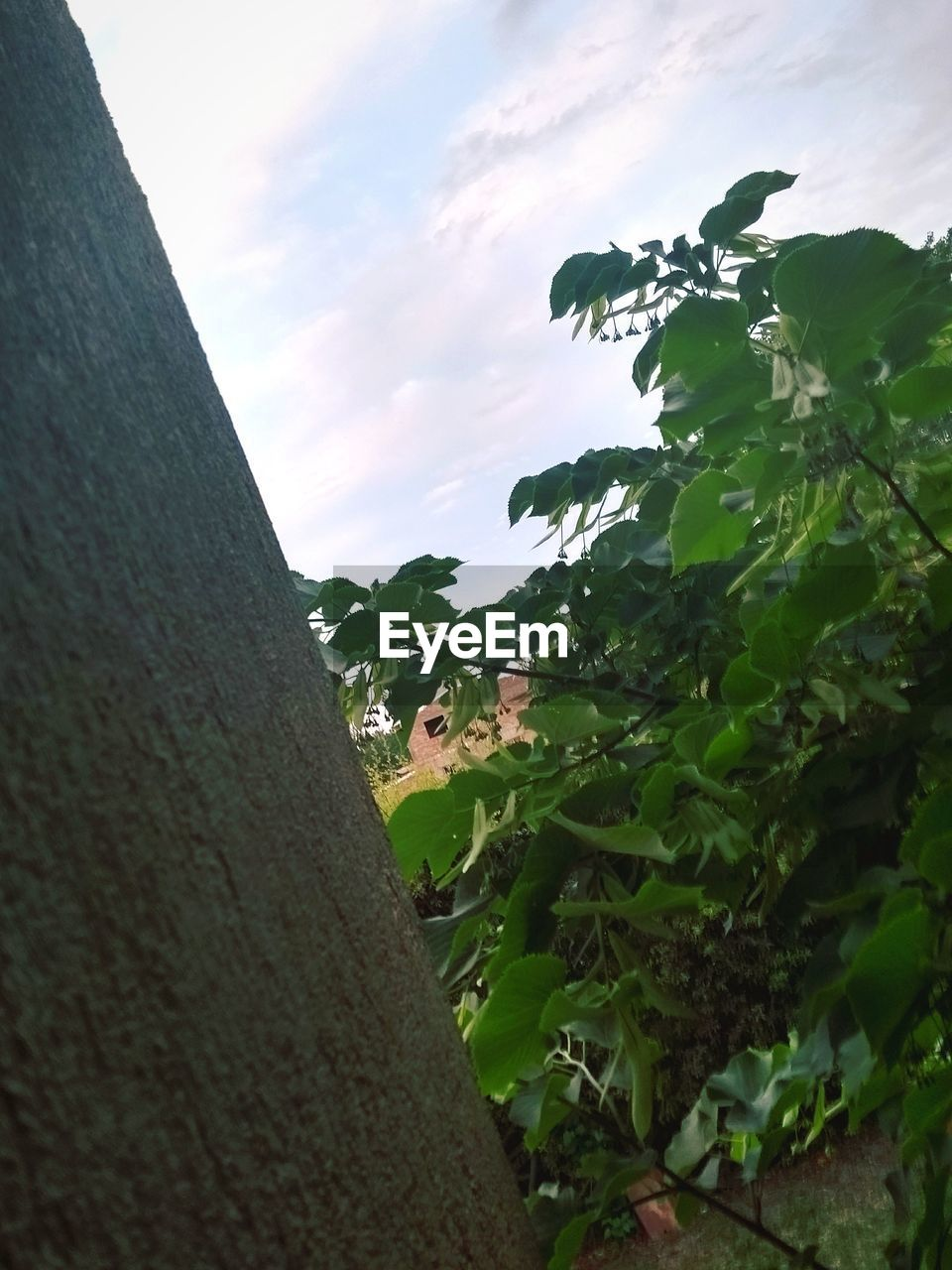 day, outdoors, nature, low angle view, growth, sky, one person, tree, leaf, real people, beauty in nature, architecture, animal themes, close-up, people