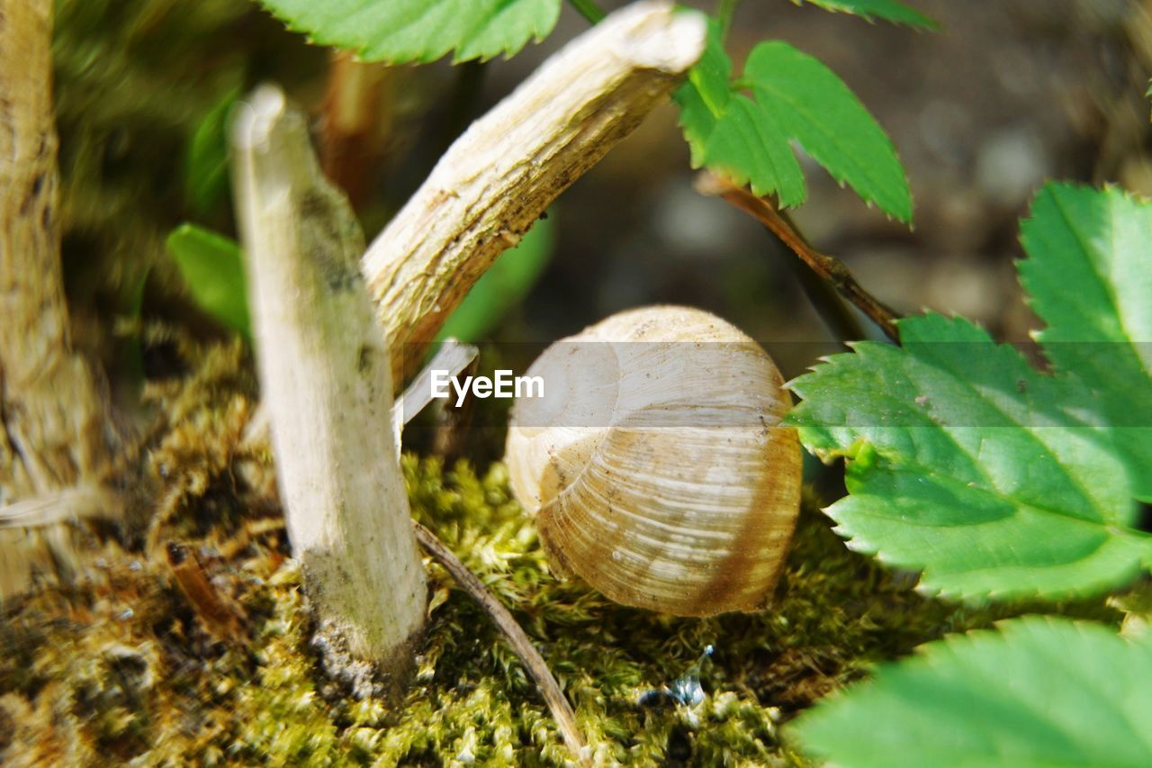 plant part, animal wildlife, leaf, close-up, animal, shell, plant, nature, animal themes, invertebrate, mollusk, gastropod, no people, day, tree, animals in the wild, animal shell, snail, selective focus, growth, outdoors