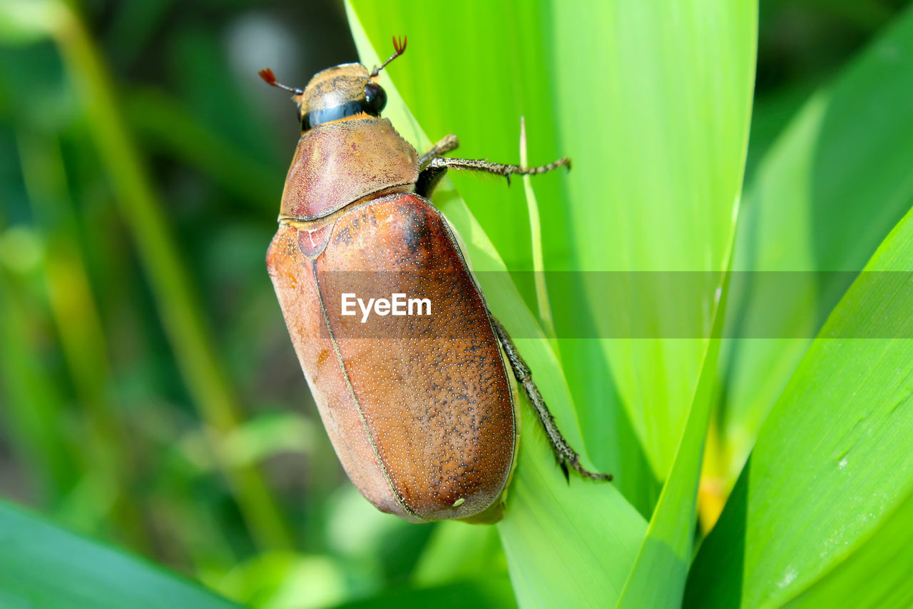 animal themes, animal wildlife, green color, animal, animals in the wild, invertebrate, insect, one animal, plant, close-up, plant part, nature, leaf, growth, no people, focus on foreground, day, selective focus, beauty in nature, outdoors, leaves