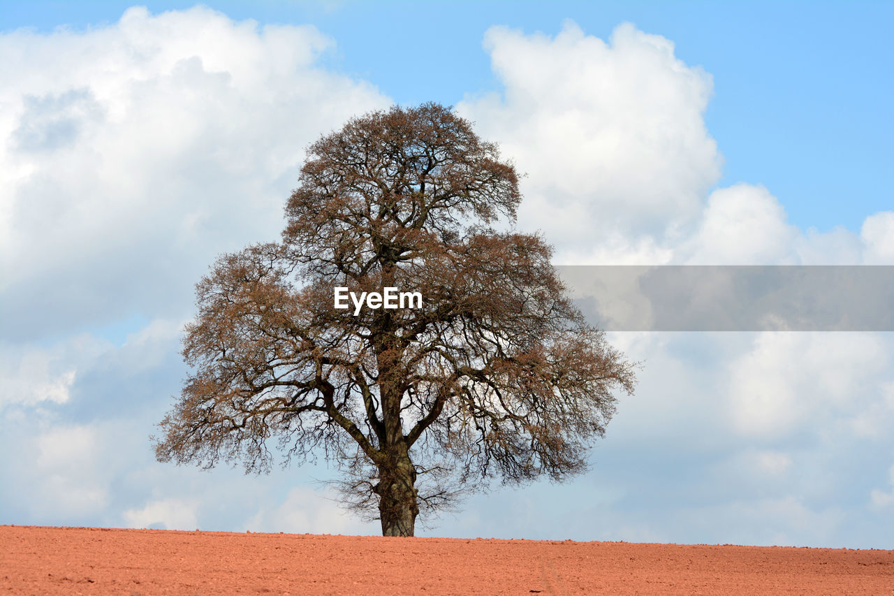 LOW ANGLE VIEW OF BARE TREE ON LANDSCAPE AGAINST SKY