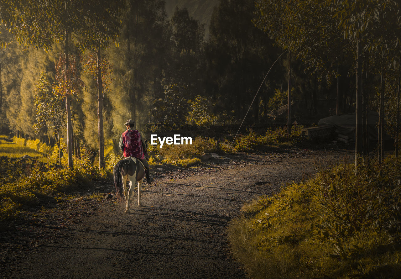 Rear View Of Man Riding Horse On Road Amidst Trees