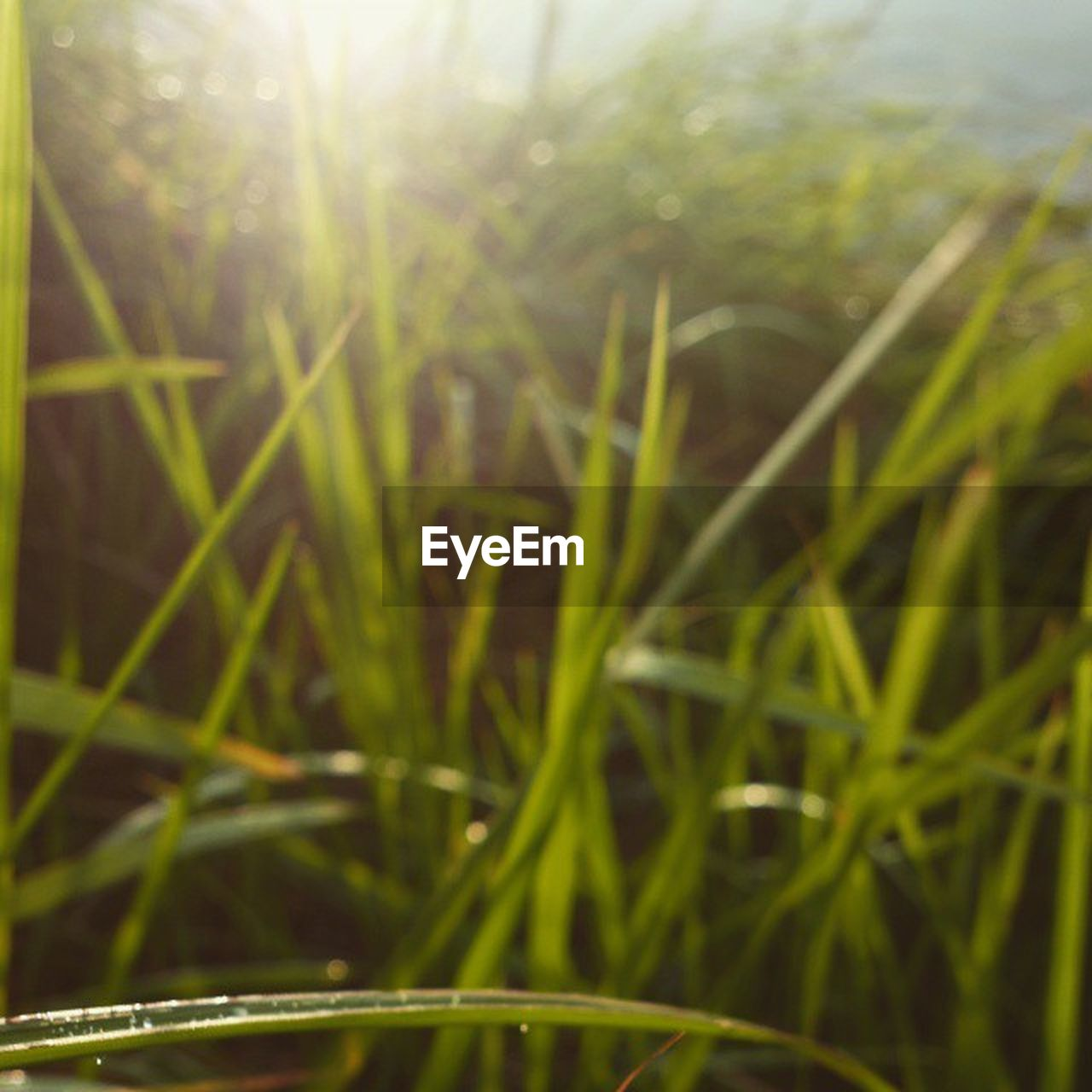 growth, nature, grass, plant, field, green color, outdoors, beauty in nature, agriculture, close-up, day, no people, freshness