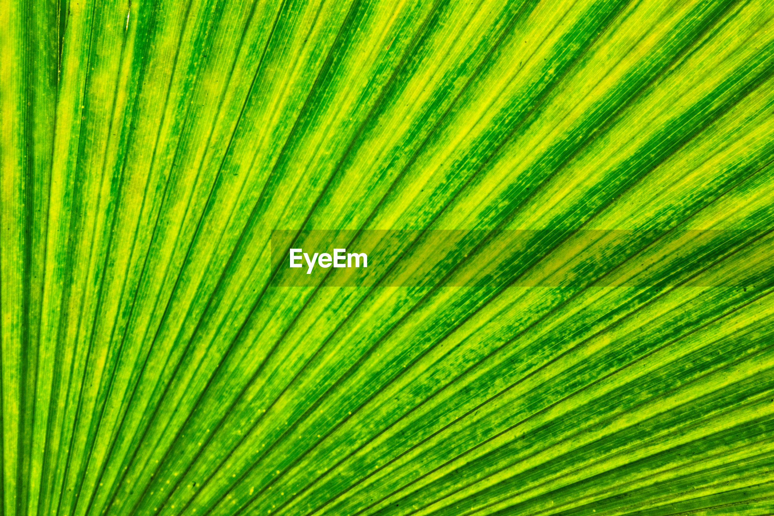 FULL FRAME OF PALM LEAVES