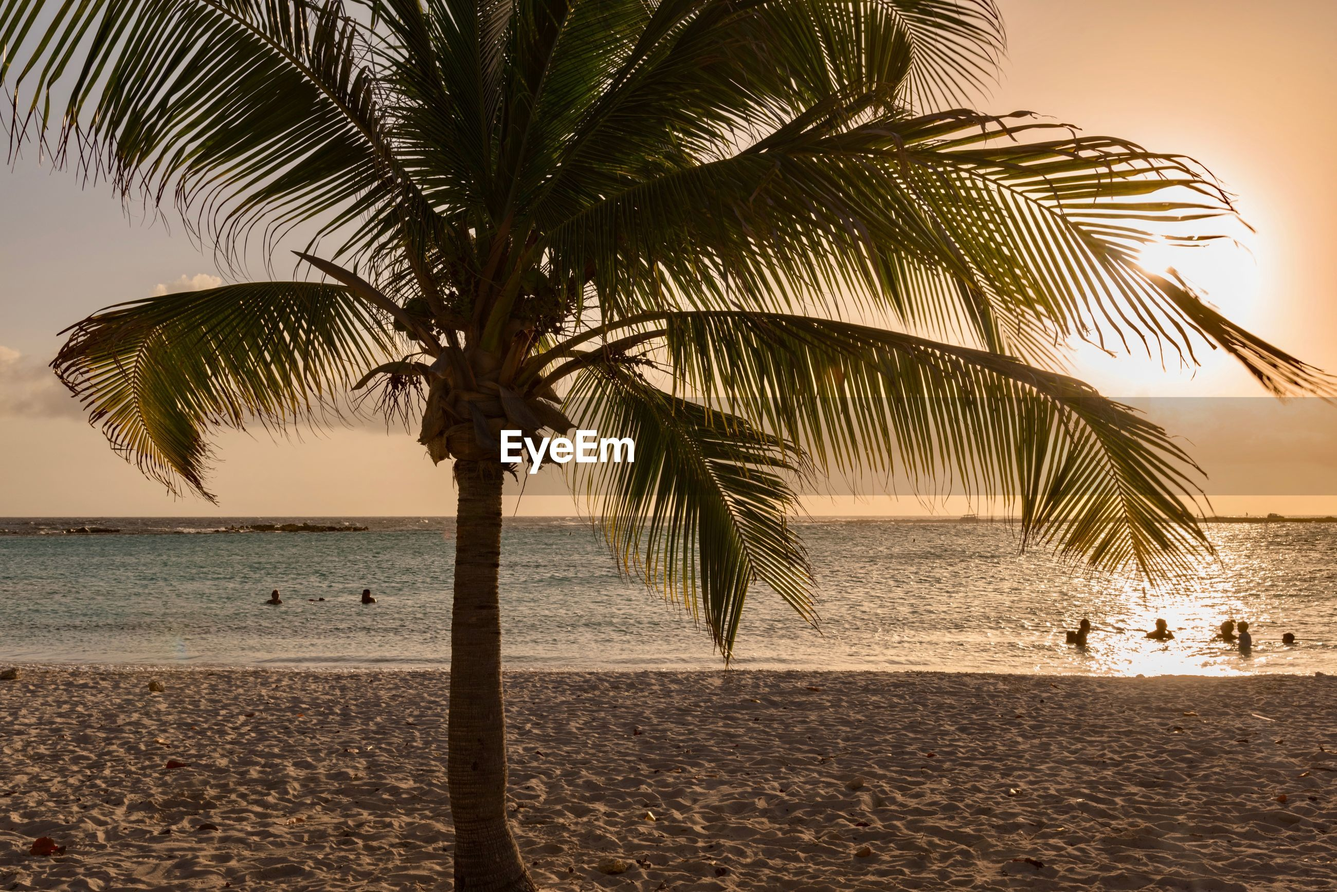 Palm tree at beach during sunset