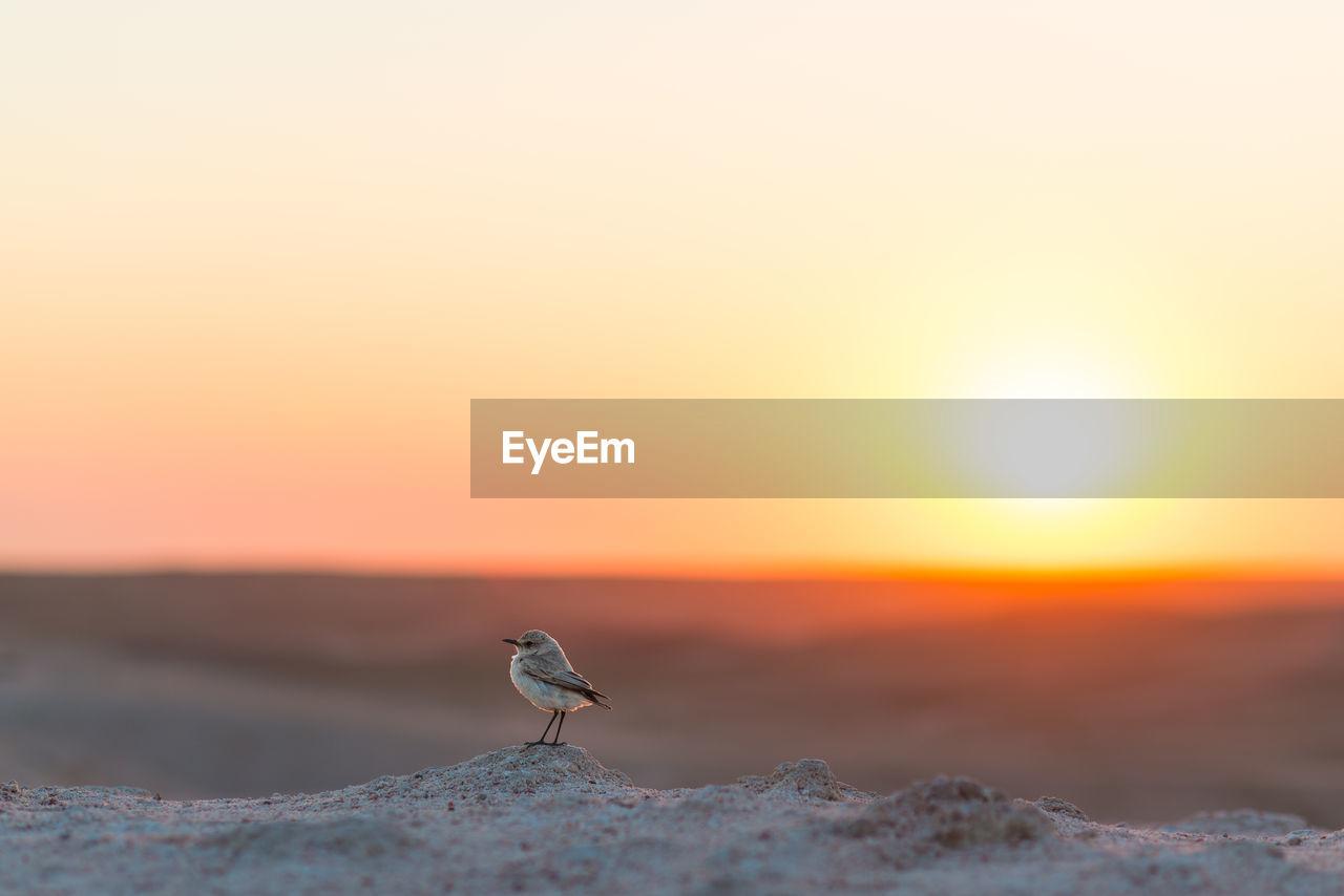 Bird At Desert Against Orange Sky