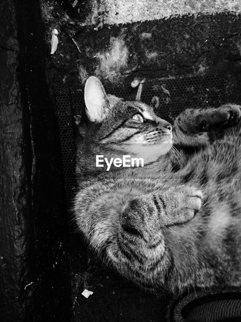 mammal, pets, animal themes, one animal, domestic animals, domestic, animal, vertebrate, relaxation, cat, feline, sleeping, domestic cat, no people, resting, close-up, animal body part, day, lying down, eyes closed, animal head, whisker