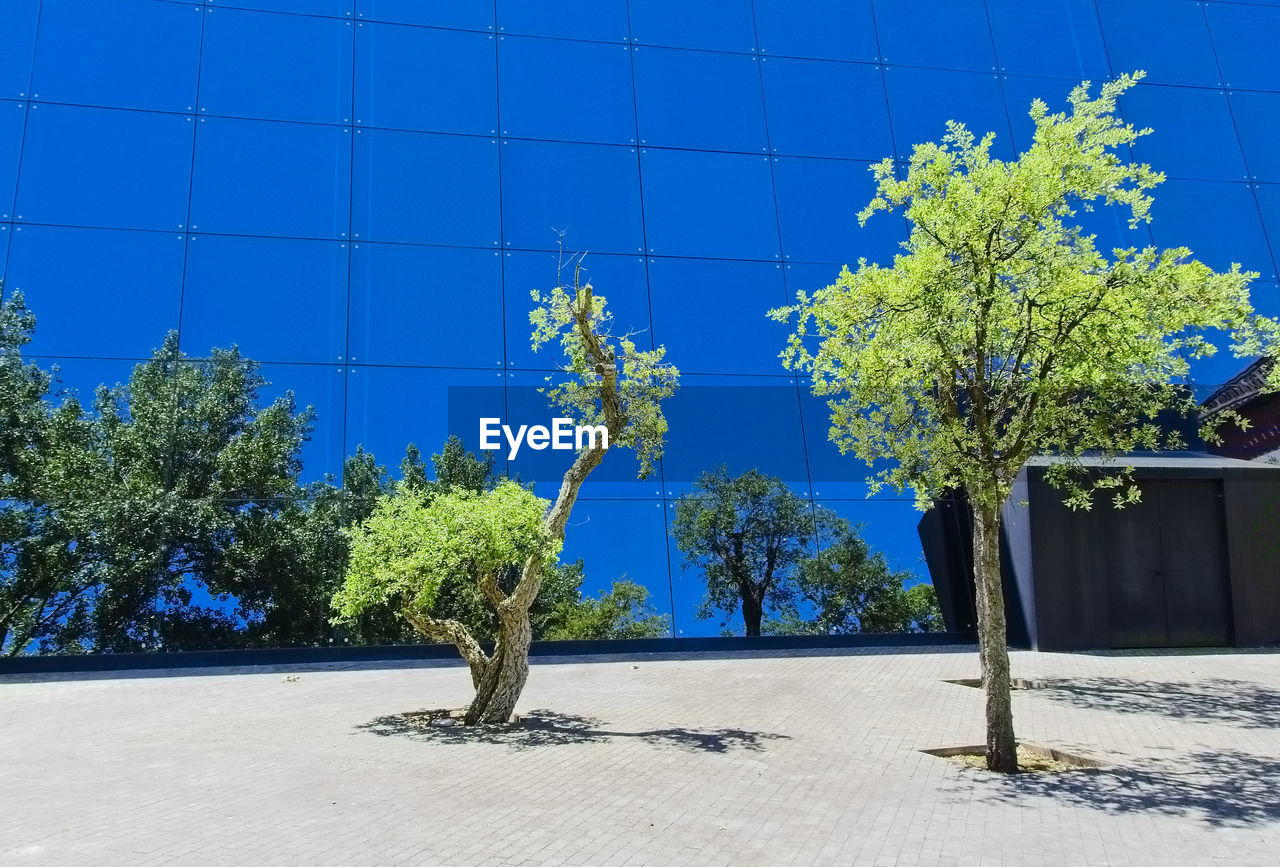 plant, growth, tree, nature, built structure, blue, day, no people, architecture, outdoors, sunlight, beauty in nature, green color, building exterior, wall - building feature, shadow, sky, footpath, building, clear sky