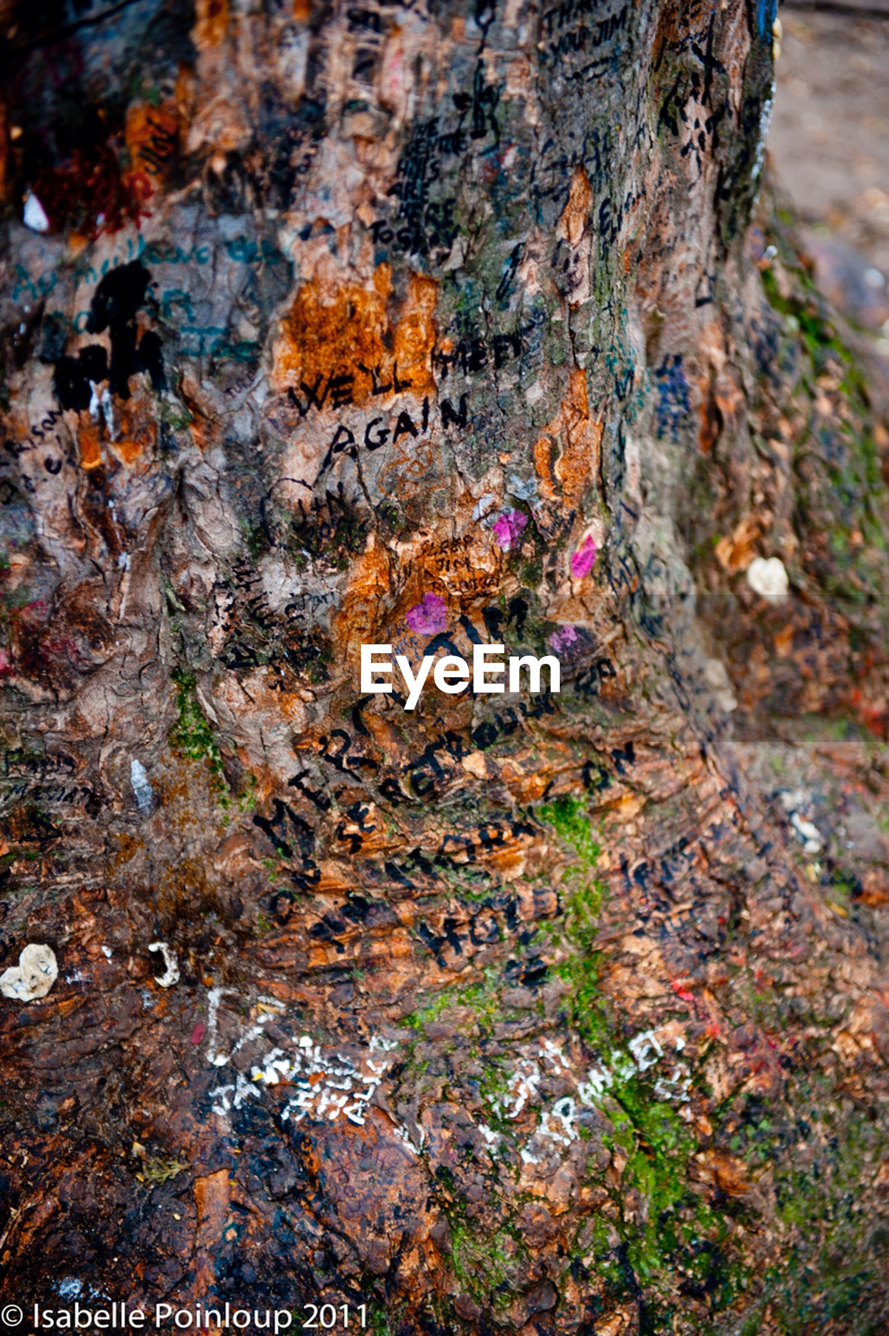 textured, tree trunk, rough, growth, nature, close-up, tree, moss, rock - object, day, no people, beauty in nature, outdoors, rock formation, high angle view, tranquility, plant, natural pattern, multi colored, growing