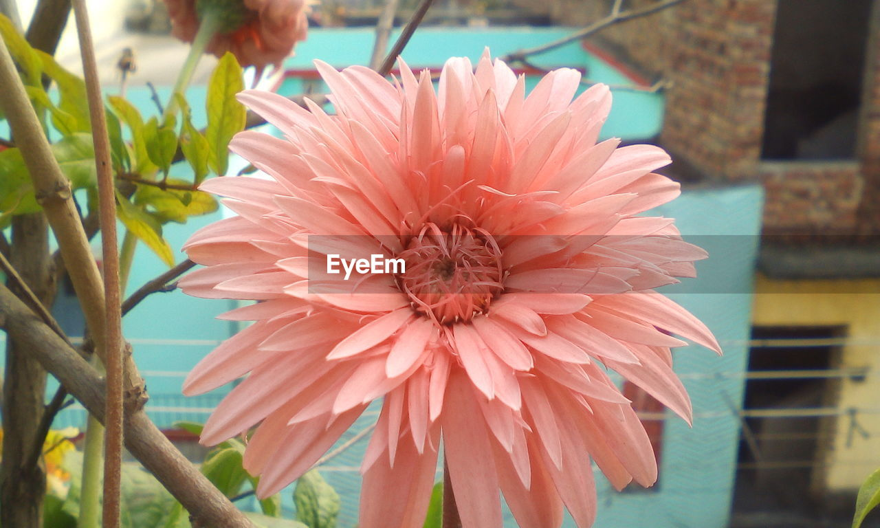 flower, flower head, petal, fragility, beauty in nature, nature, freshness, growth, focus on foreground, day, plant, outdoors, no people, blooming, close-up
