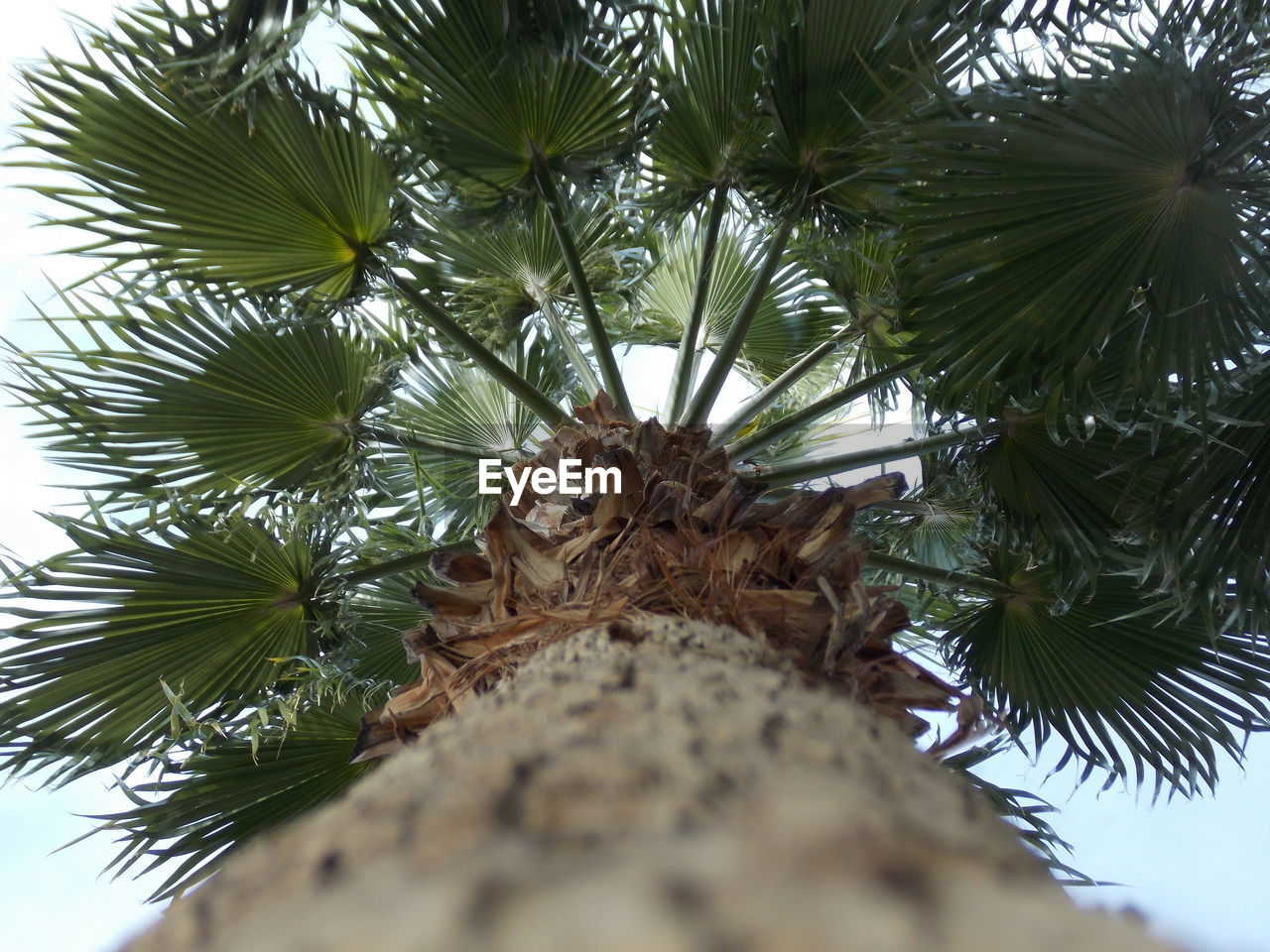 low angle view, tree, day, nature, growth, no people, close-up, outdoors, animal themes, beauty in nature