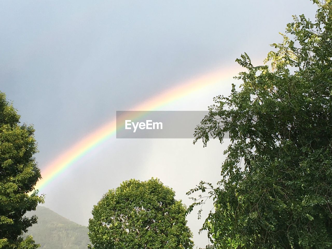 rainbow, tree, low angle view, nature, double rainbow, scenics, multi colored, day, outdoors, beauty in nature, no people, growth, sky