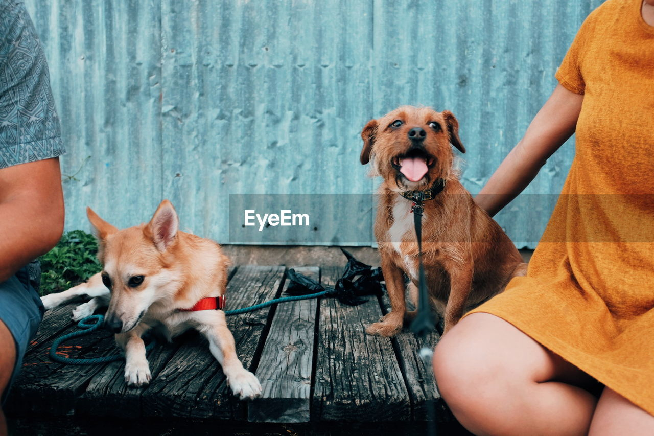 Midsection Of People With Dogs Sitting On Wooden Table