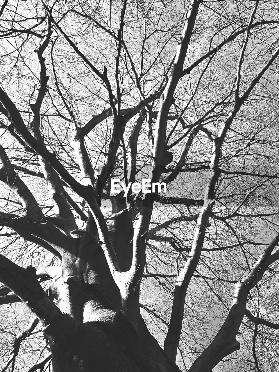 tree, branch, bare tree, nature, sunlight, shadow, day, tree trunk, outdoors, no people, low angle view, beauty in nature, growth, sky