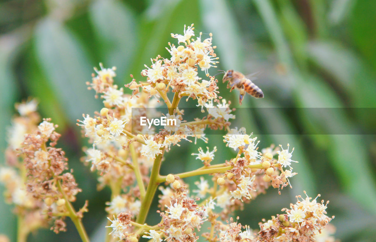 flower, flowering plant, plant, growth, fragility, beauty in nature, vulnerability, freshness, close-up, invertebrate, day, selective focus, nature, no people, flower head, animals in the wild, insect, animal wildlife, animal themes, focus on foreground, outdoors, pollination