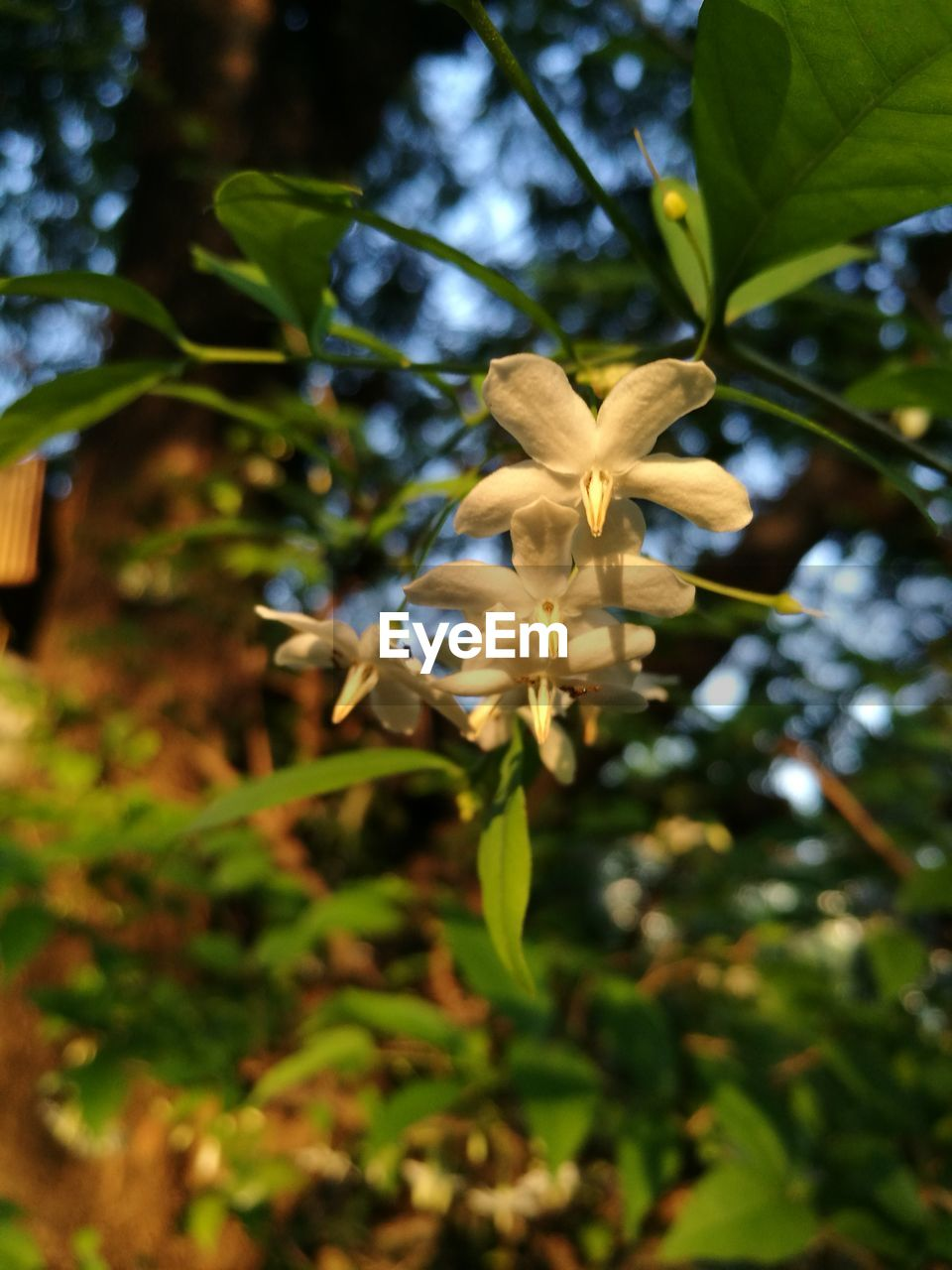 growth, nature, flower, fragility, beauty in nature, petal, plant, day, outdoors, freshness, no people, leaf, flower head, close-up, tree